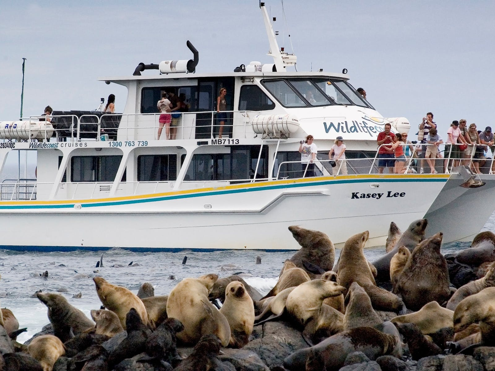 Wildlife Coast Cruises