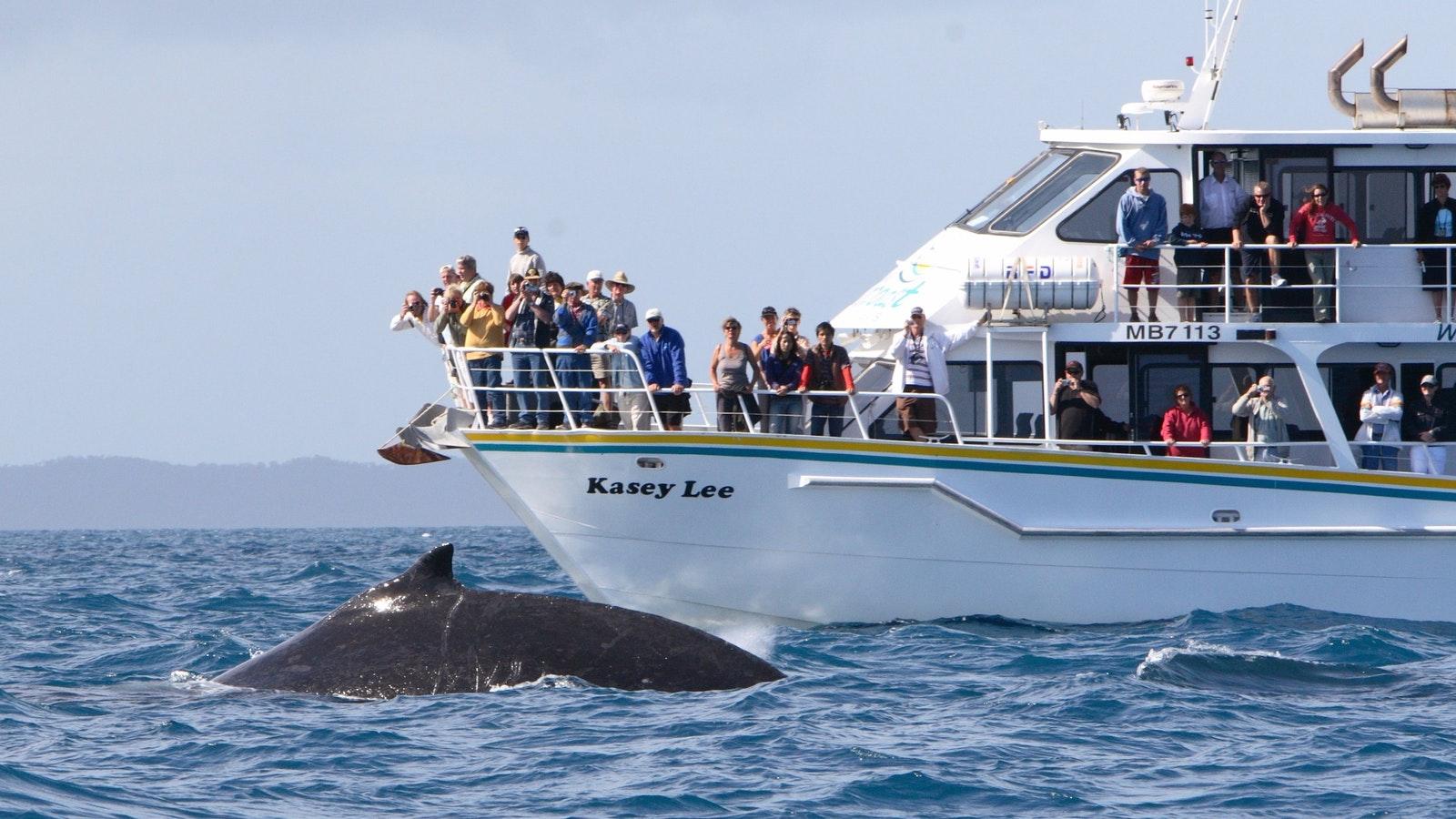 wildlife coast cruises, phillip island