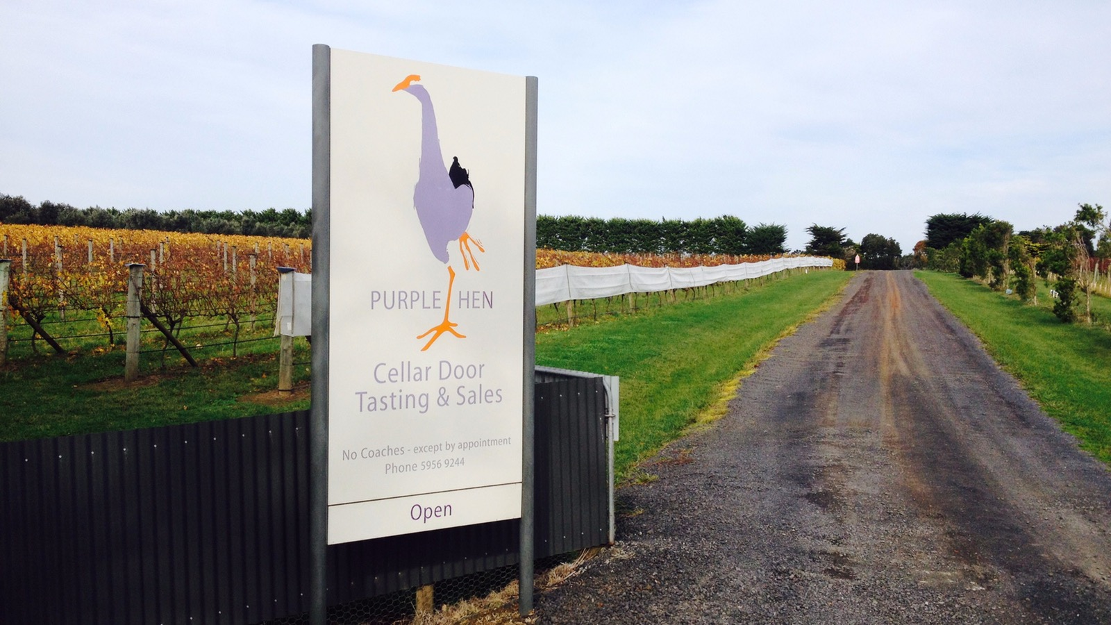Entrance to Purple Hen Winery with vineyards in background
