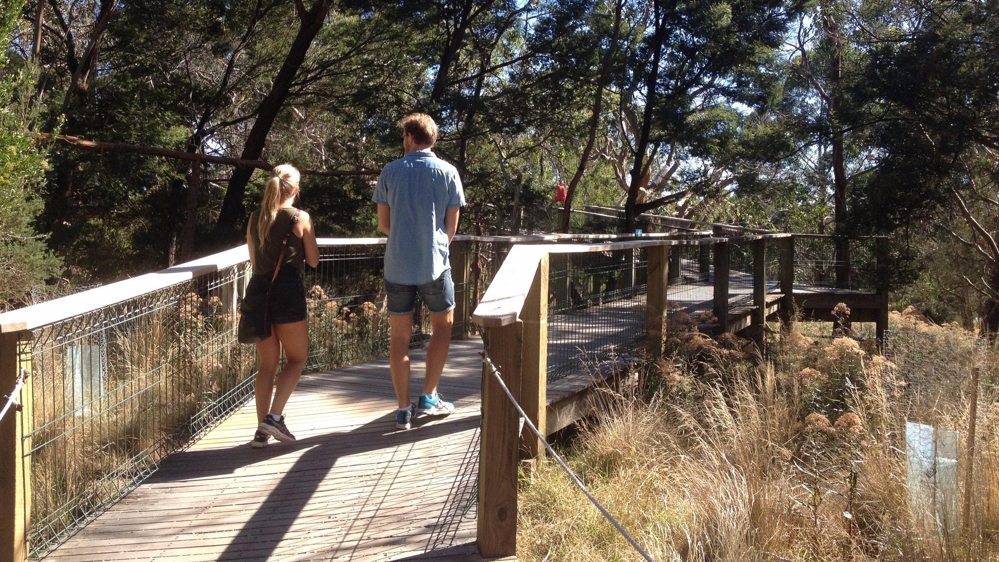 Photo of boardwalk at the Koala Centre