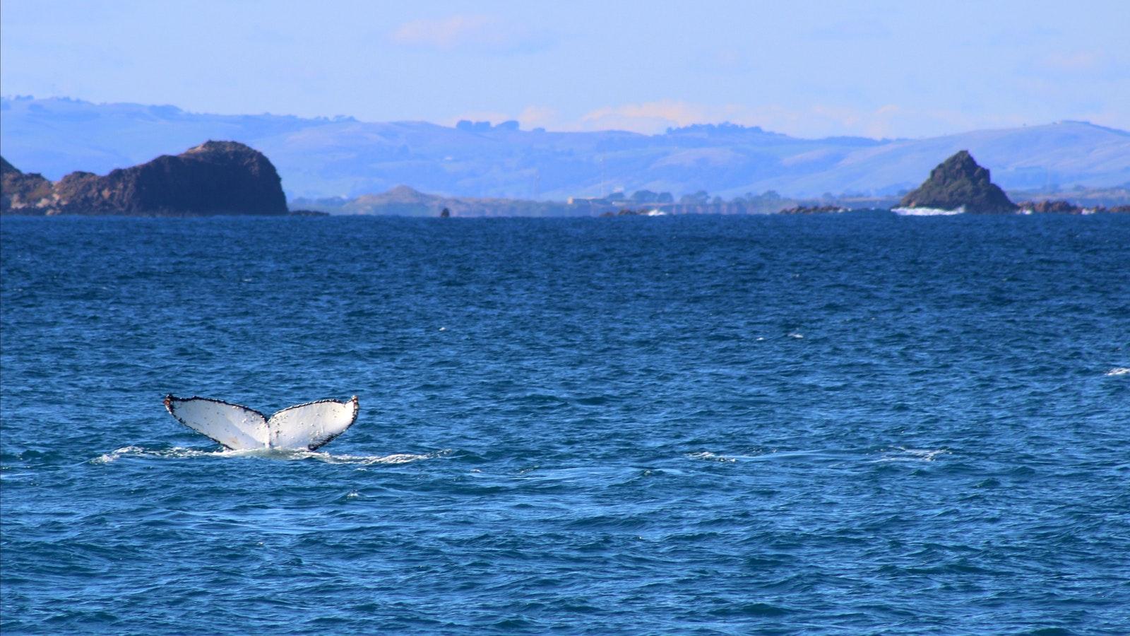 phillip island, whale, renee de bondt, unearthed designs, wildlife coast cruises