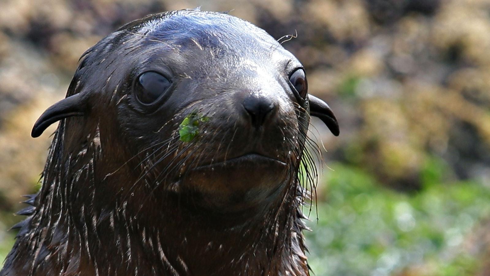 Seal pup up close!