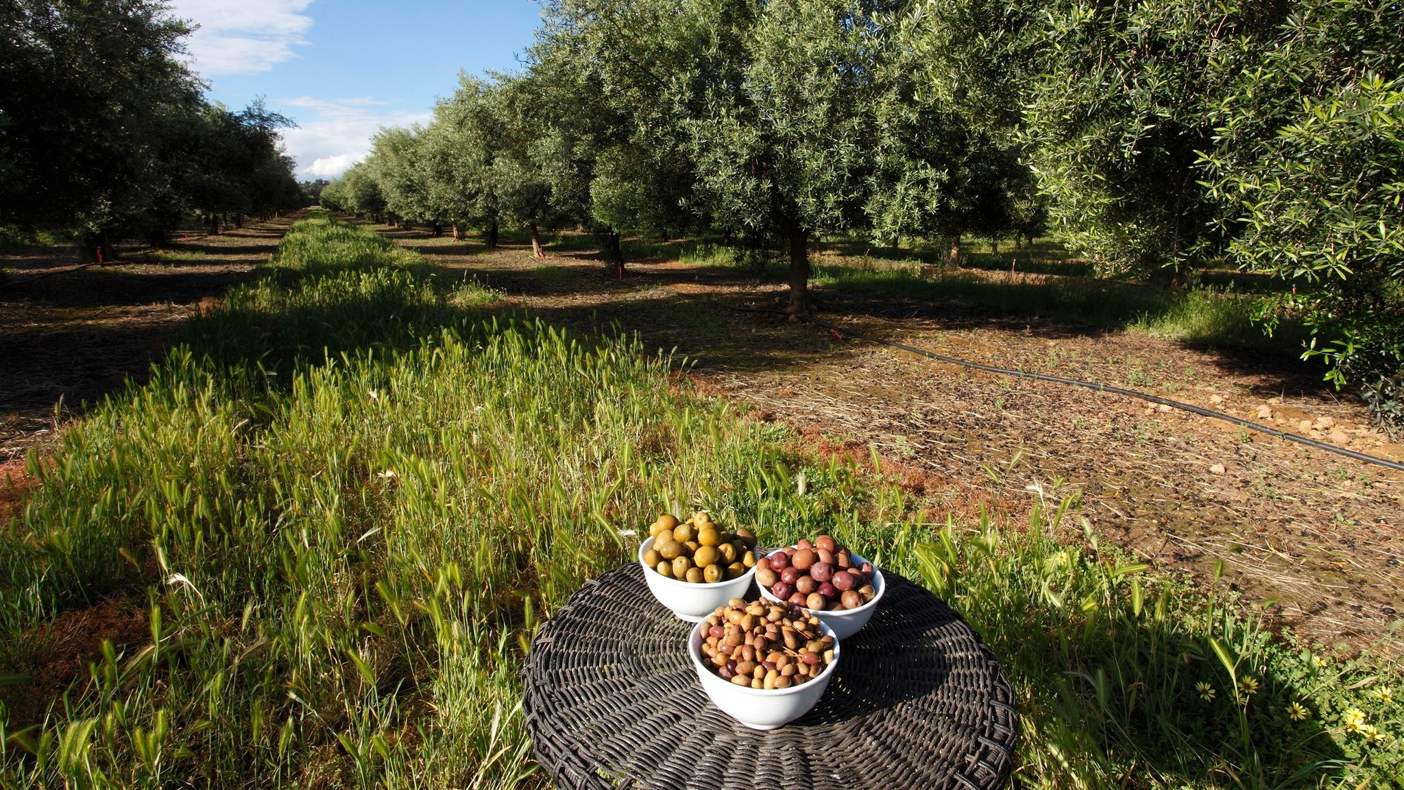 A lunch in the Olive Grove