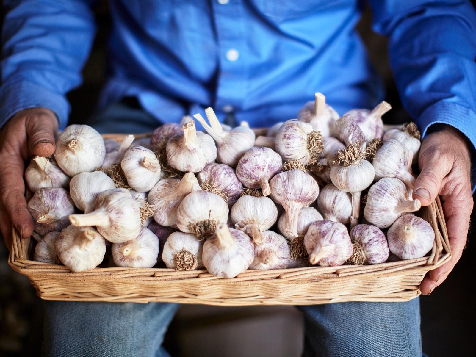 Katamatite Garlic