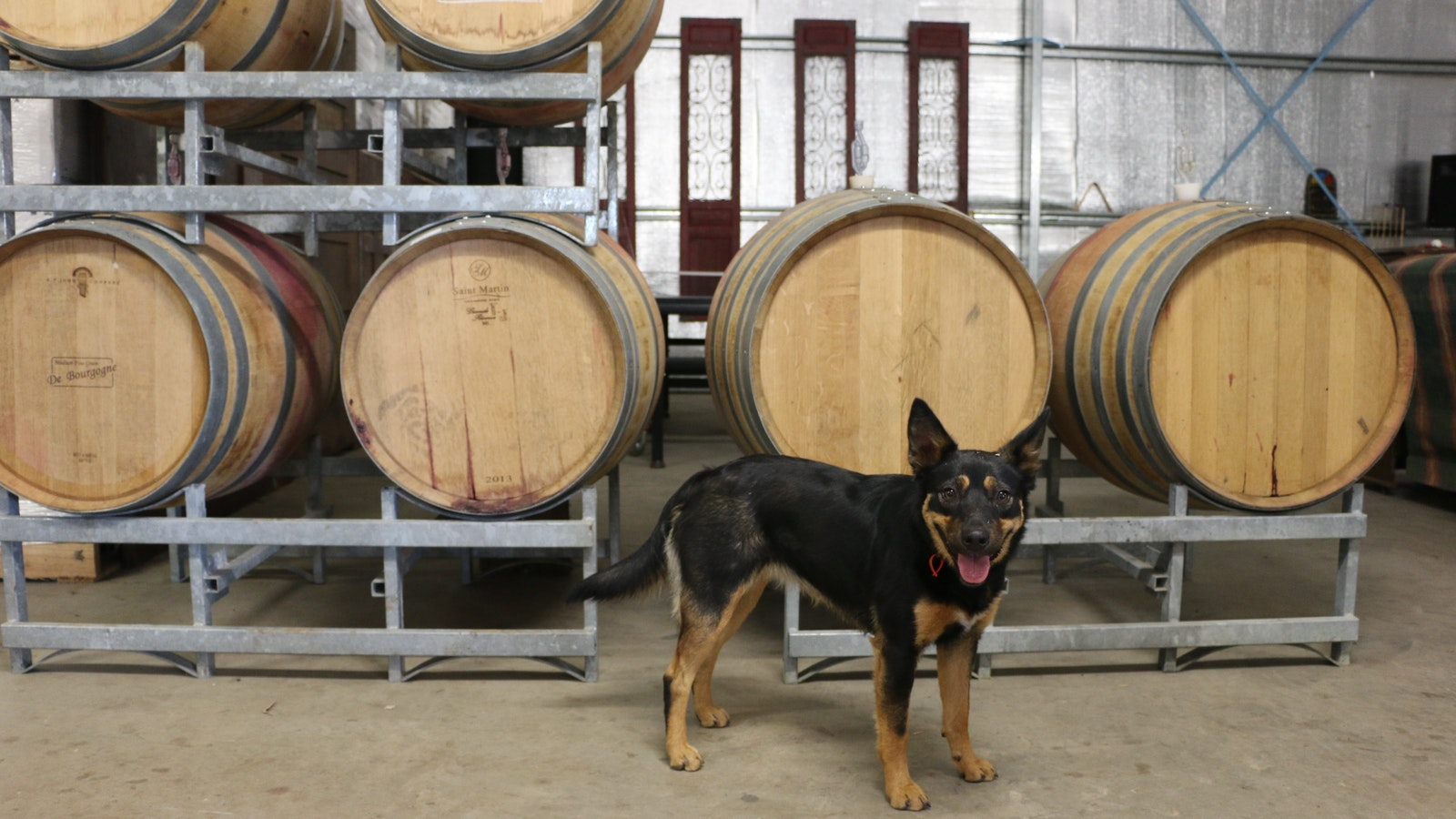 Wine dog Annie protecting our barrels. Her other duties are fetching sticks and welcoming guests.