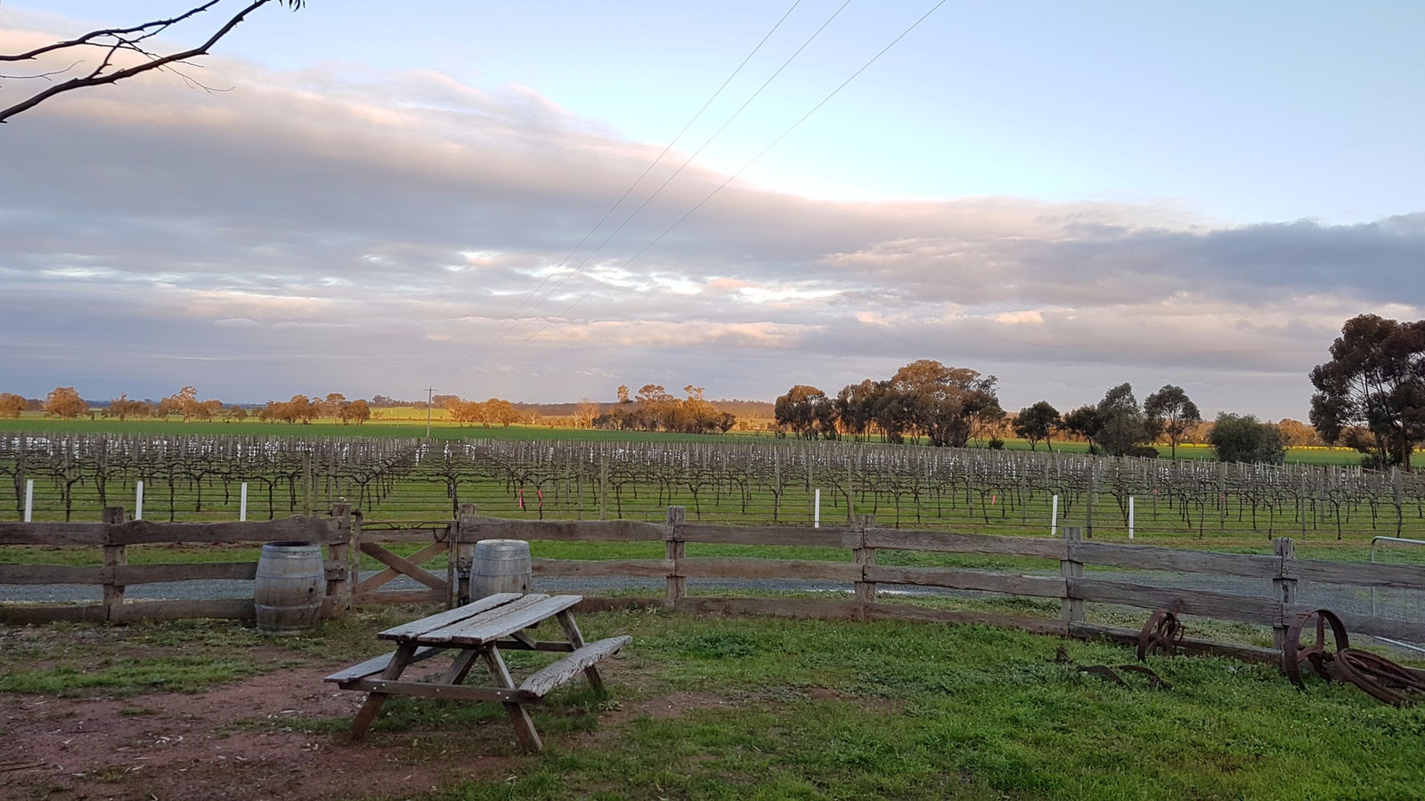 Gorgeous sunsets at the Shiraz Republic. This is the view from our cellar door.