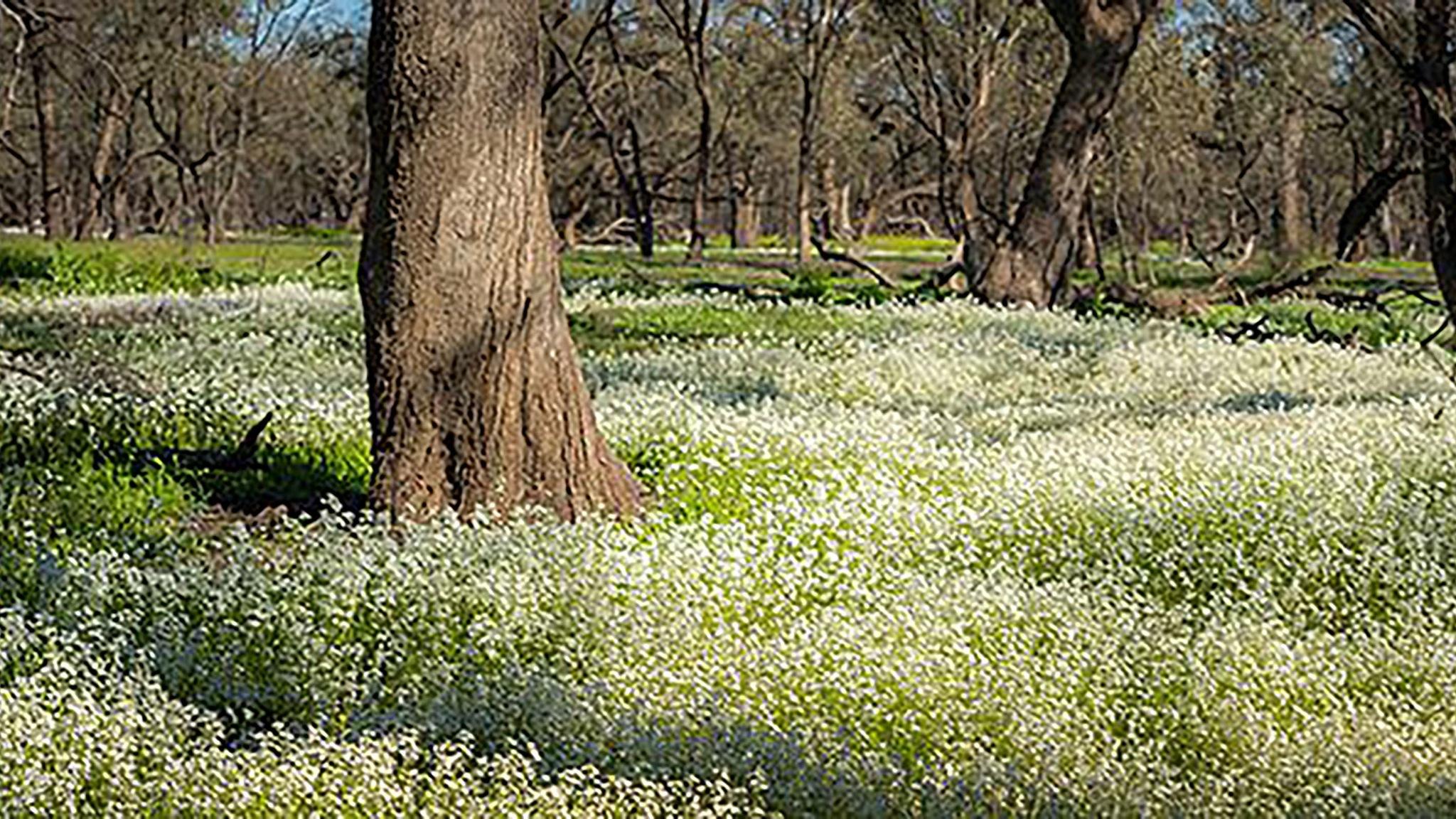 Leaghur State Park - Parks Victoria