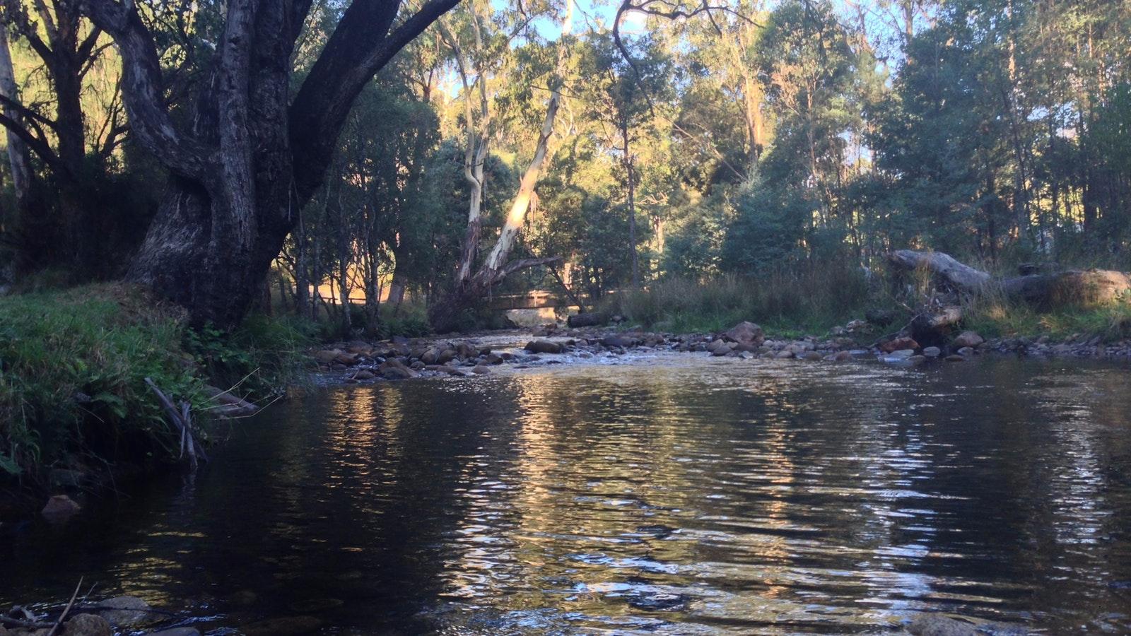 Delatite River at Mirimbah Park
