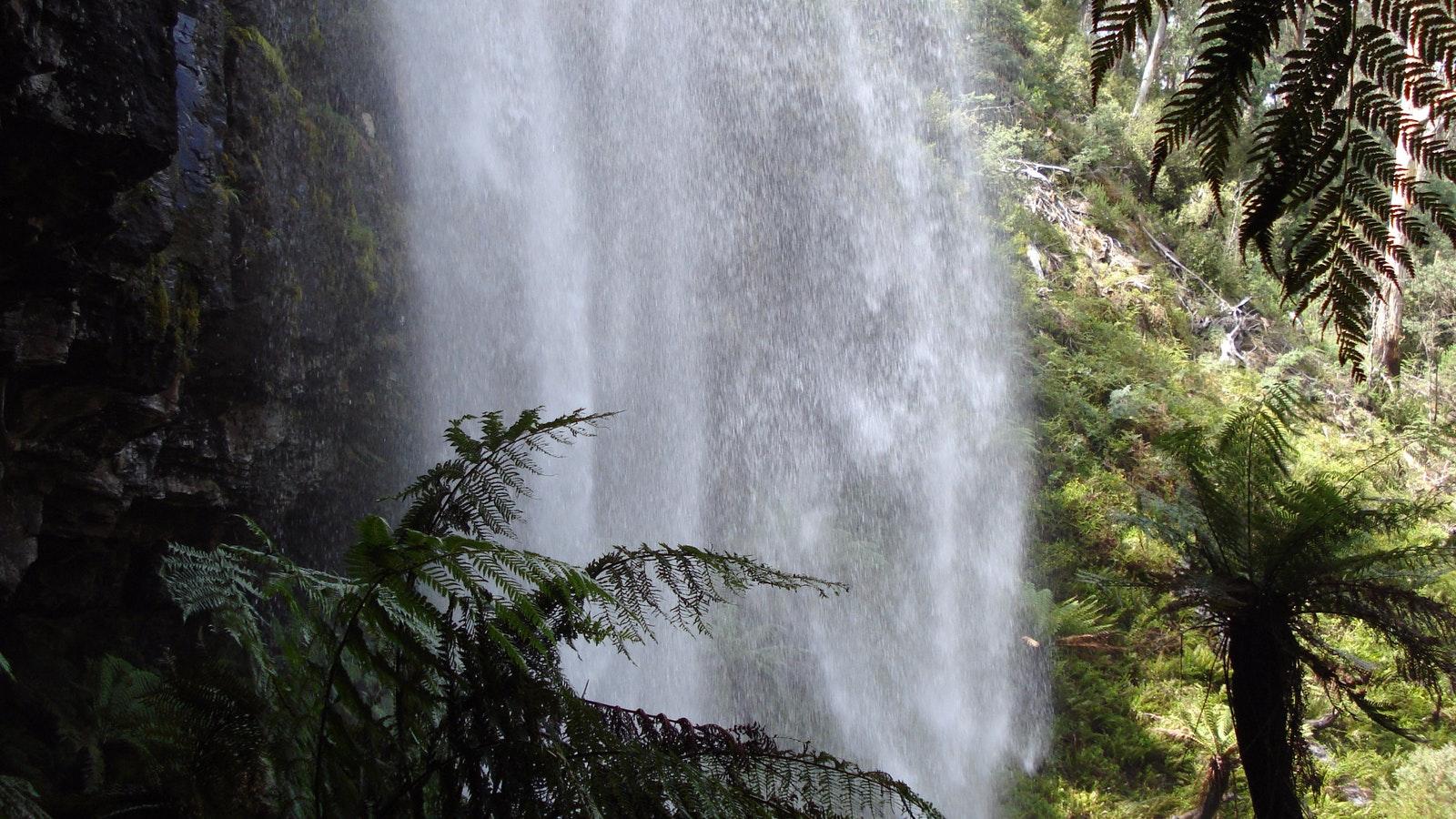 Bindaree Falls and tree ferns
