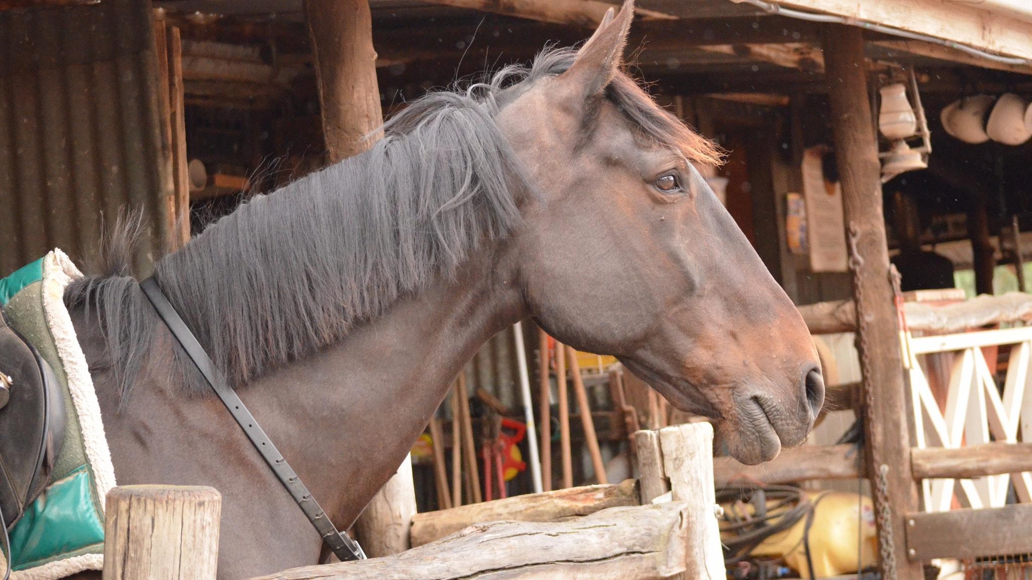 Grampians Horse Riding Centre Tours