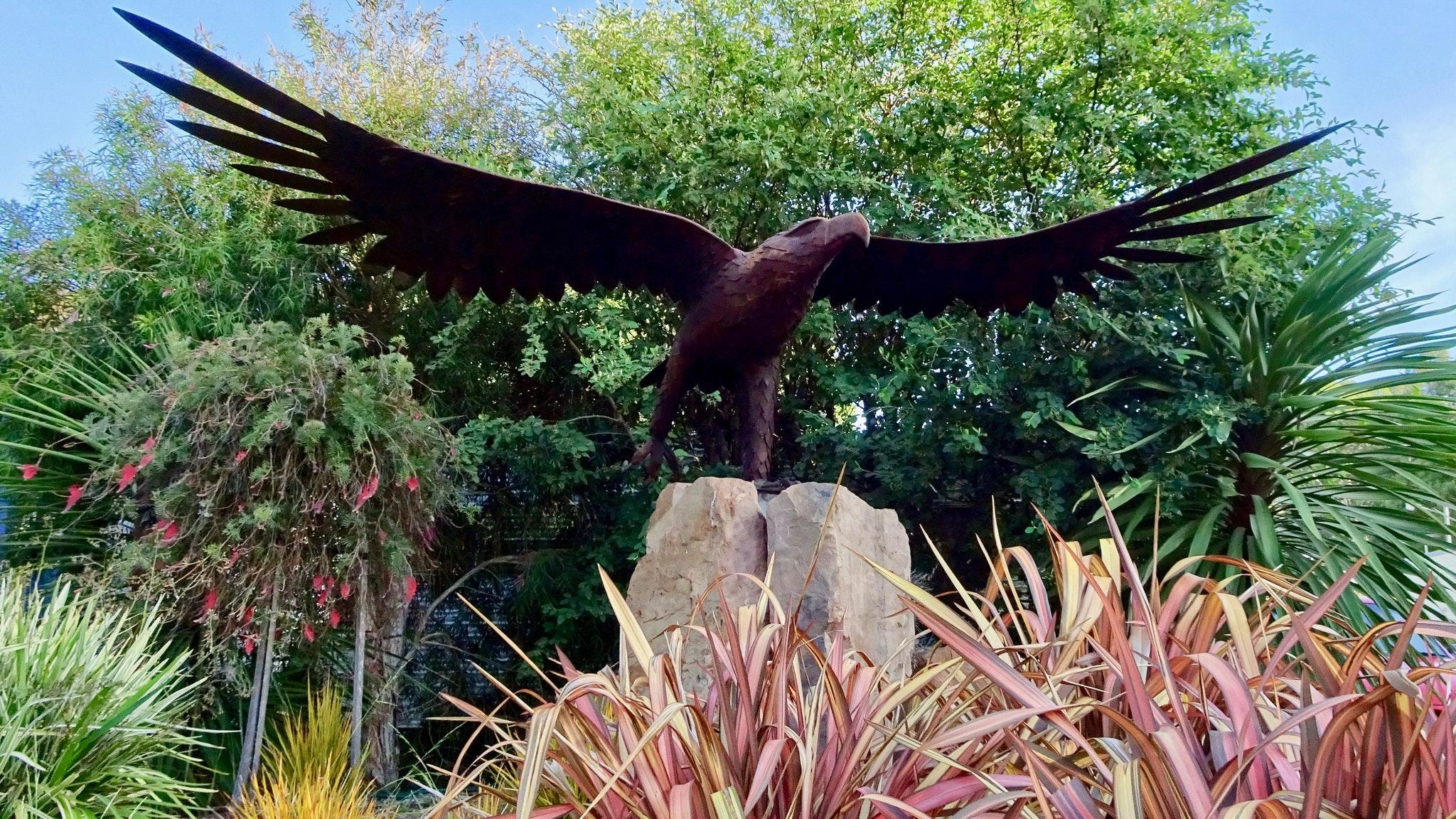 Eagle at Cabin 46