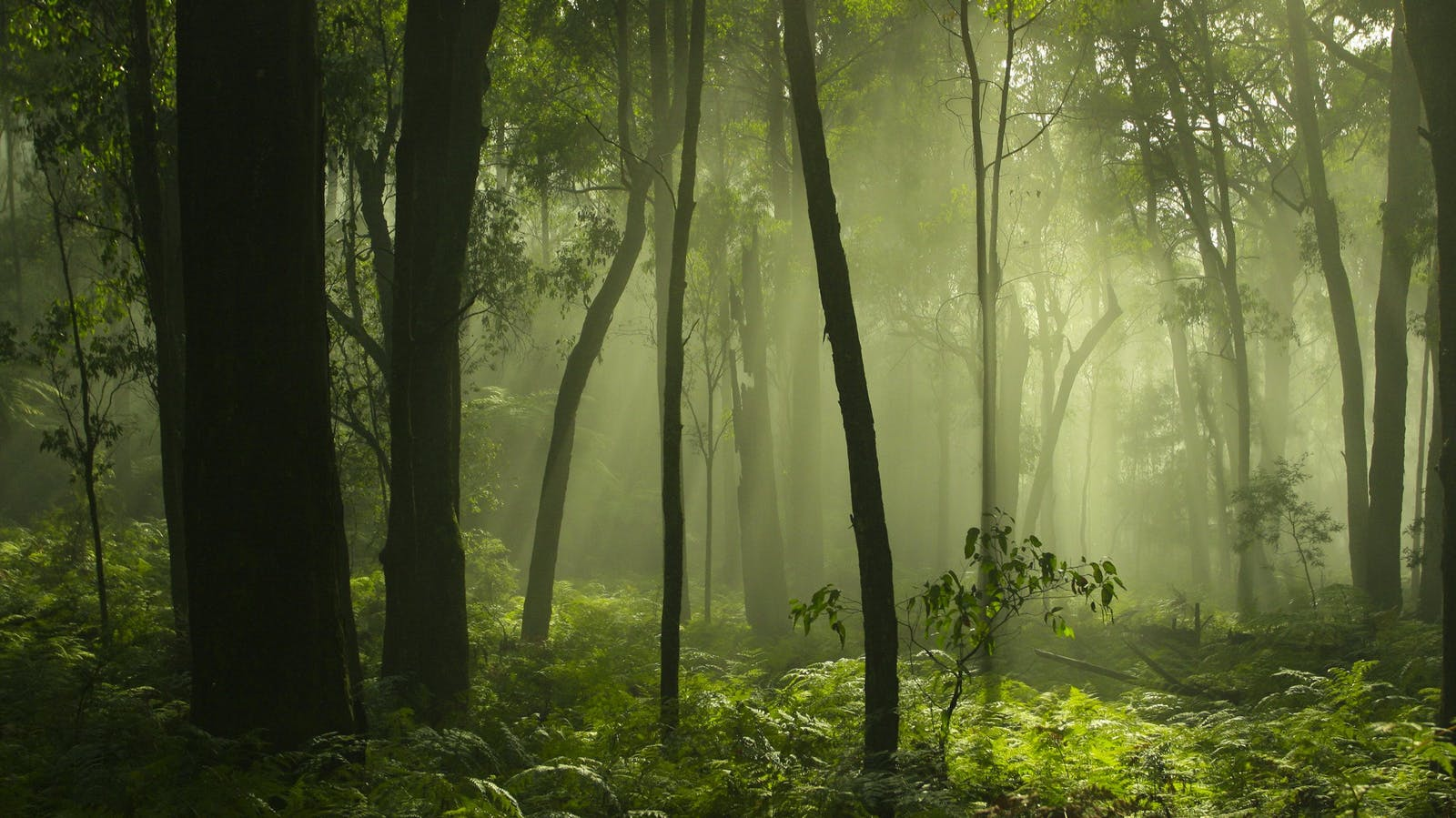 Green Mist in forest setting