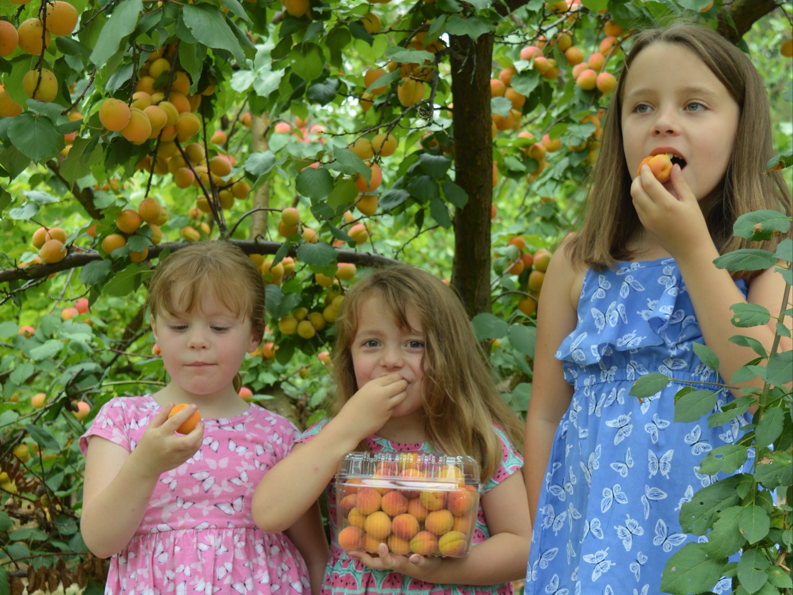 Girls with Apricots
