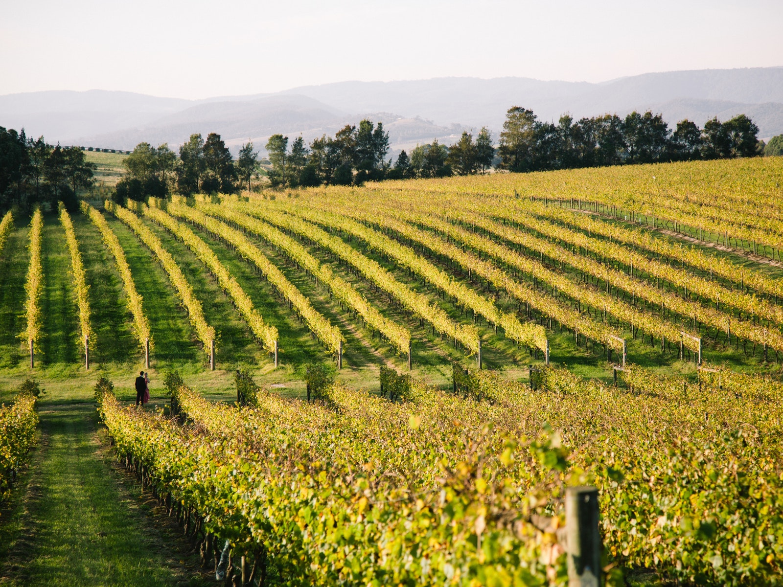 Pinot Noir Month