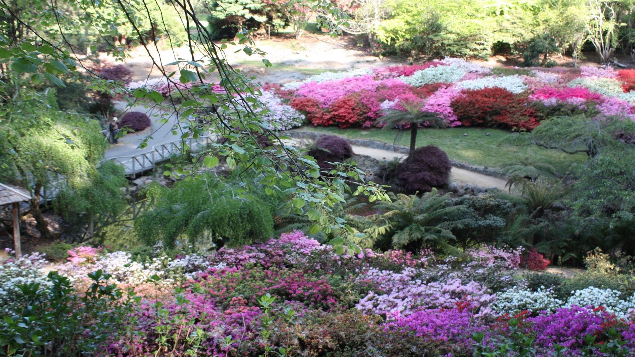Mist @ Olinda Gardens