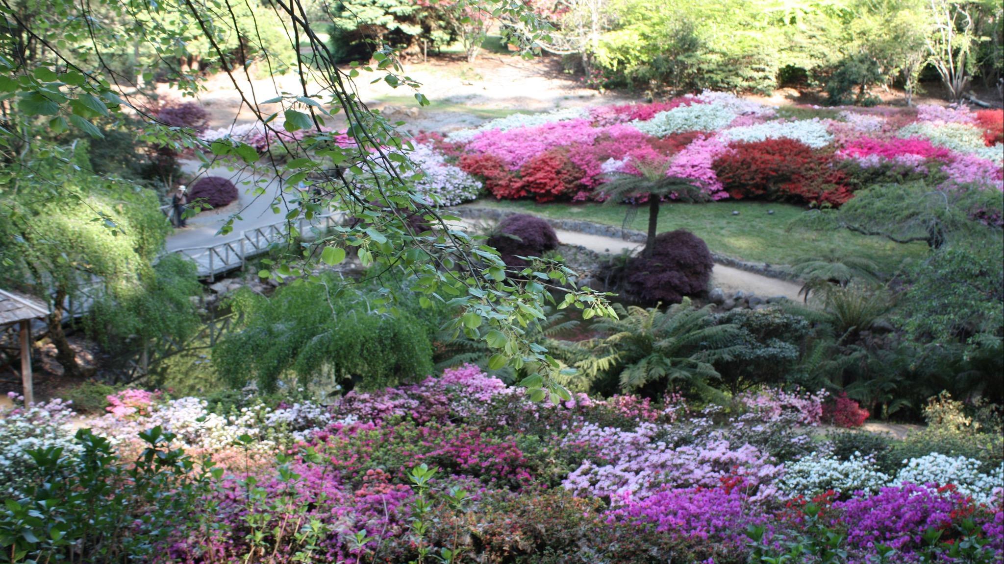 Mist @ Olinda National Rhododendron Gardens