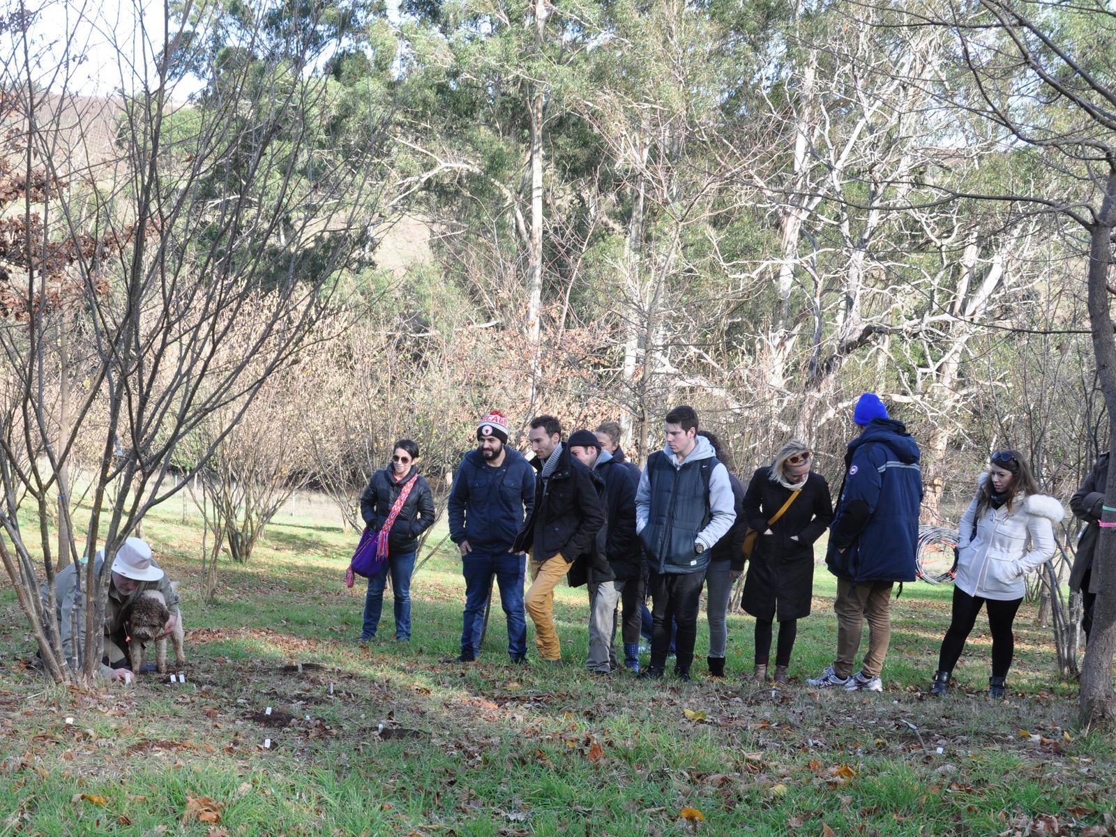 Hunt event group locating a truffle with Lani the truffle dog at Yarra Valley Truffles