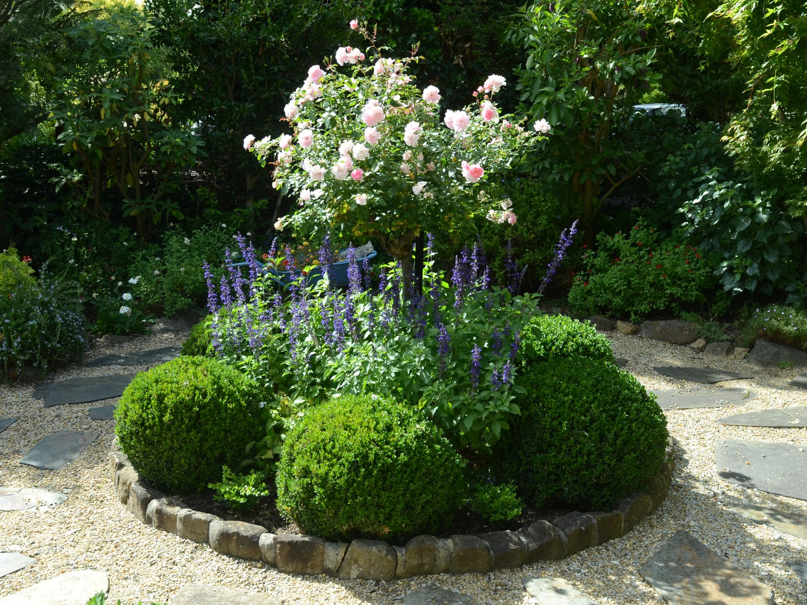 "alt=""shaped box balls with blue salvias and pink rose in a circular bed surrounded by a stone path"""