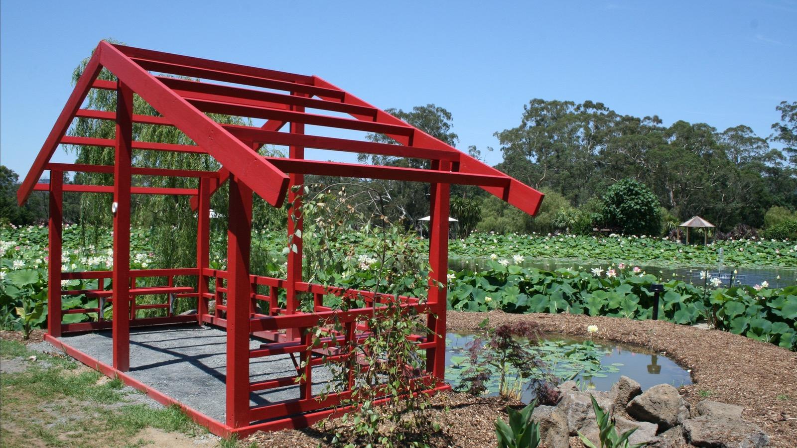 Golden lotus pond