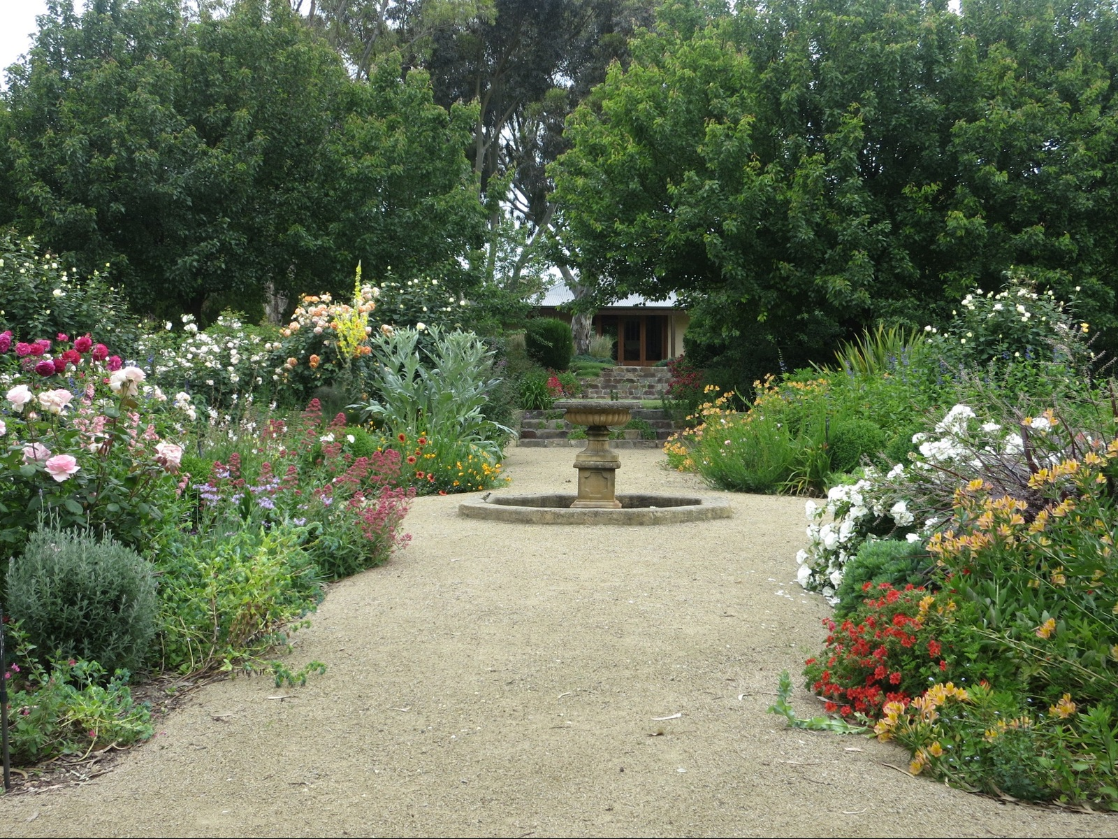 central gravel path bordered with flowering roses and perennials