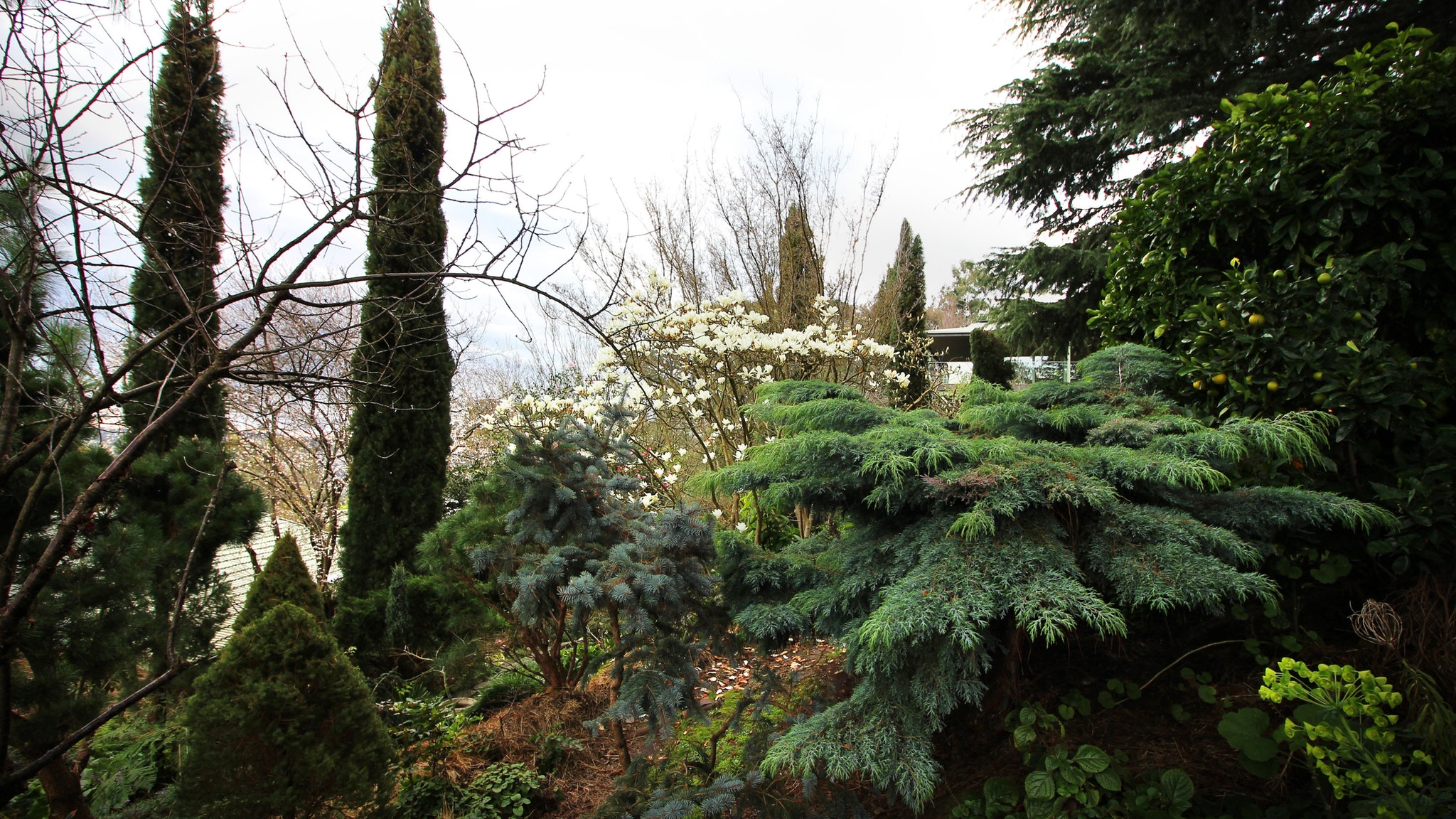 Stunning collection of conifers at Orvieto Open Garden