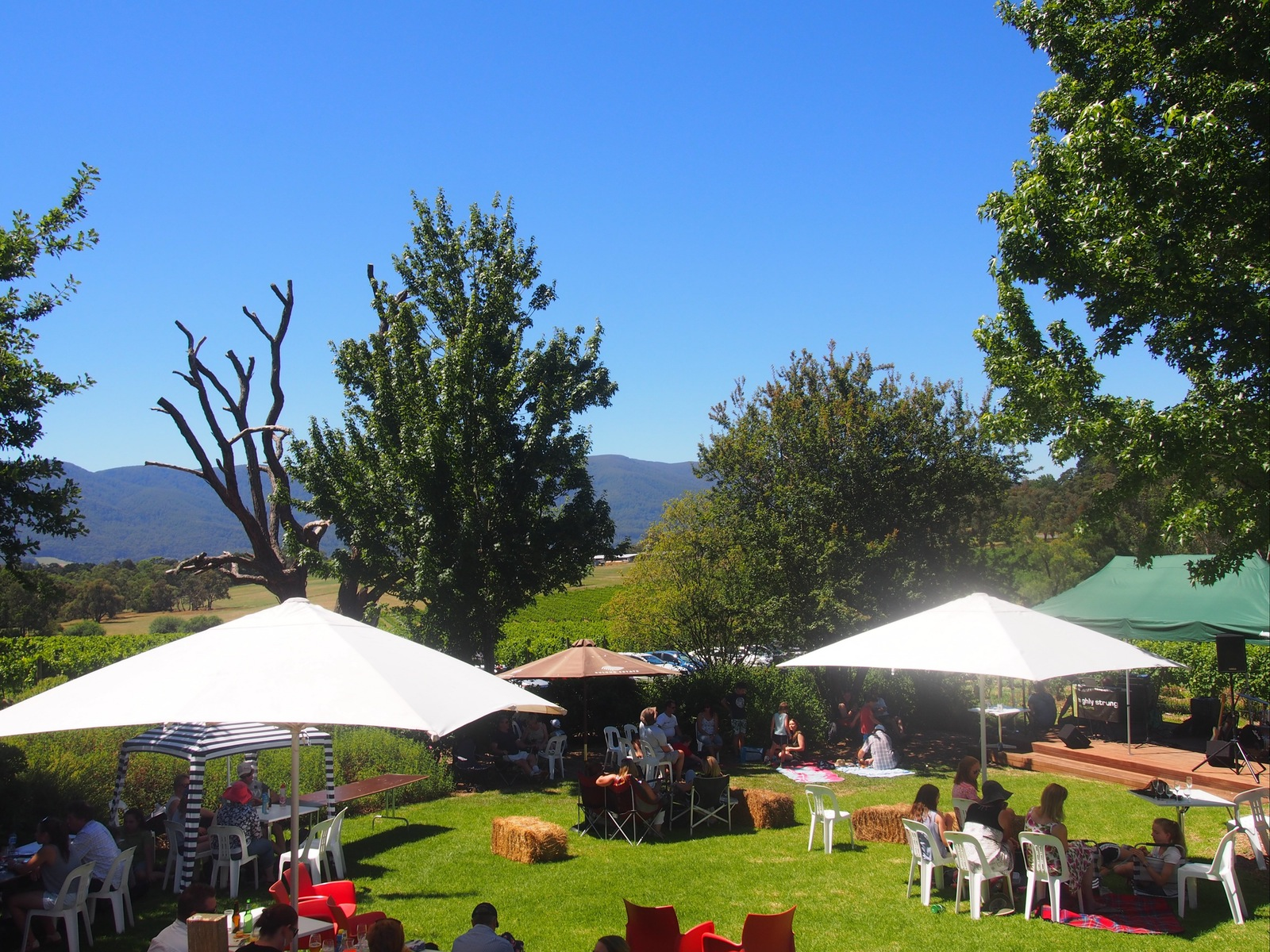 Live Music this Summer at Bulong Estate Winery