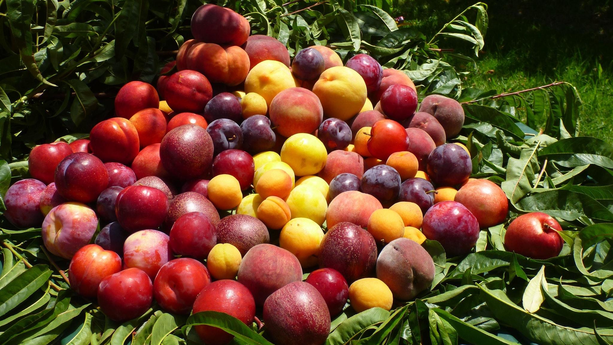 Summer stonefruit