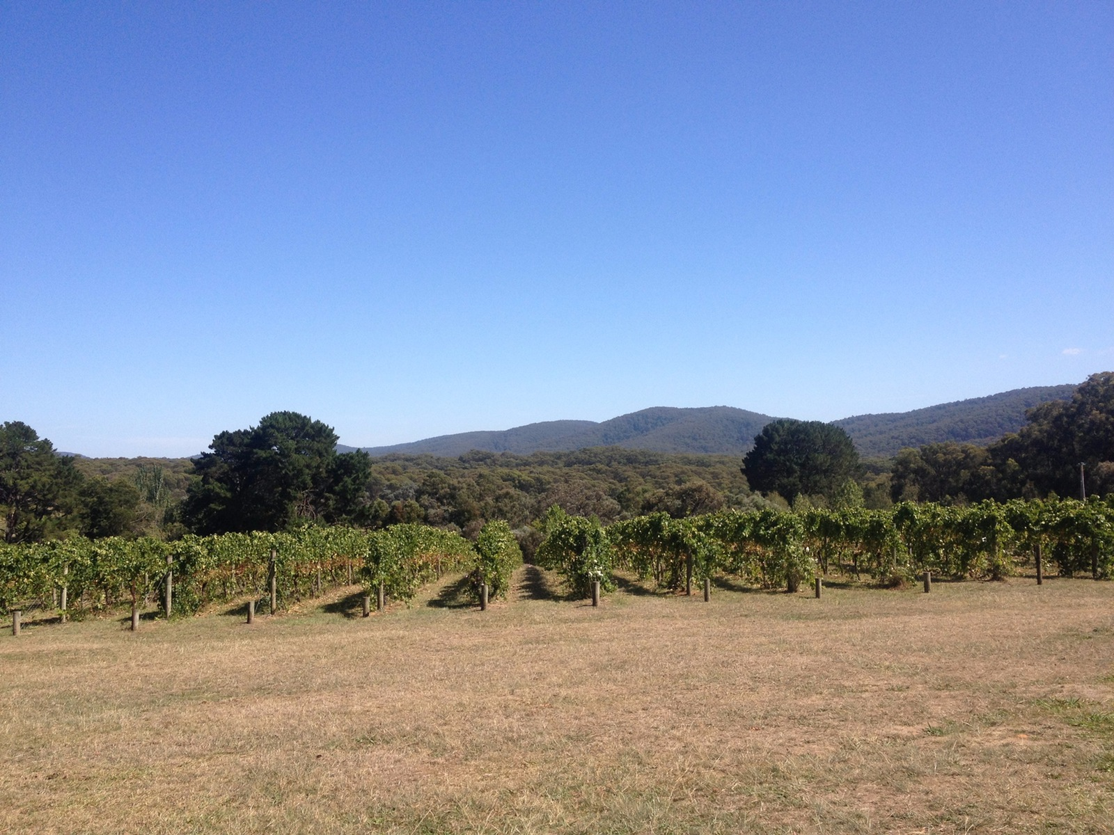 jinks creek vineyard