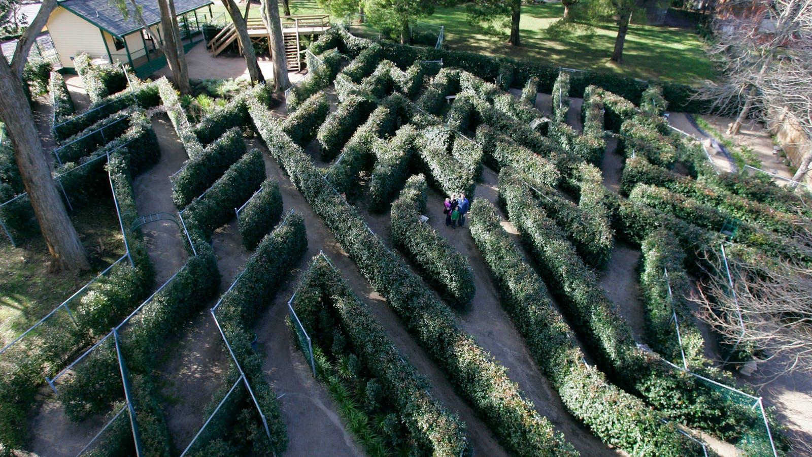 SkyHigh's Maze