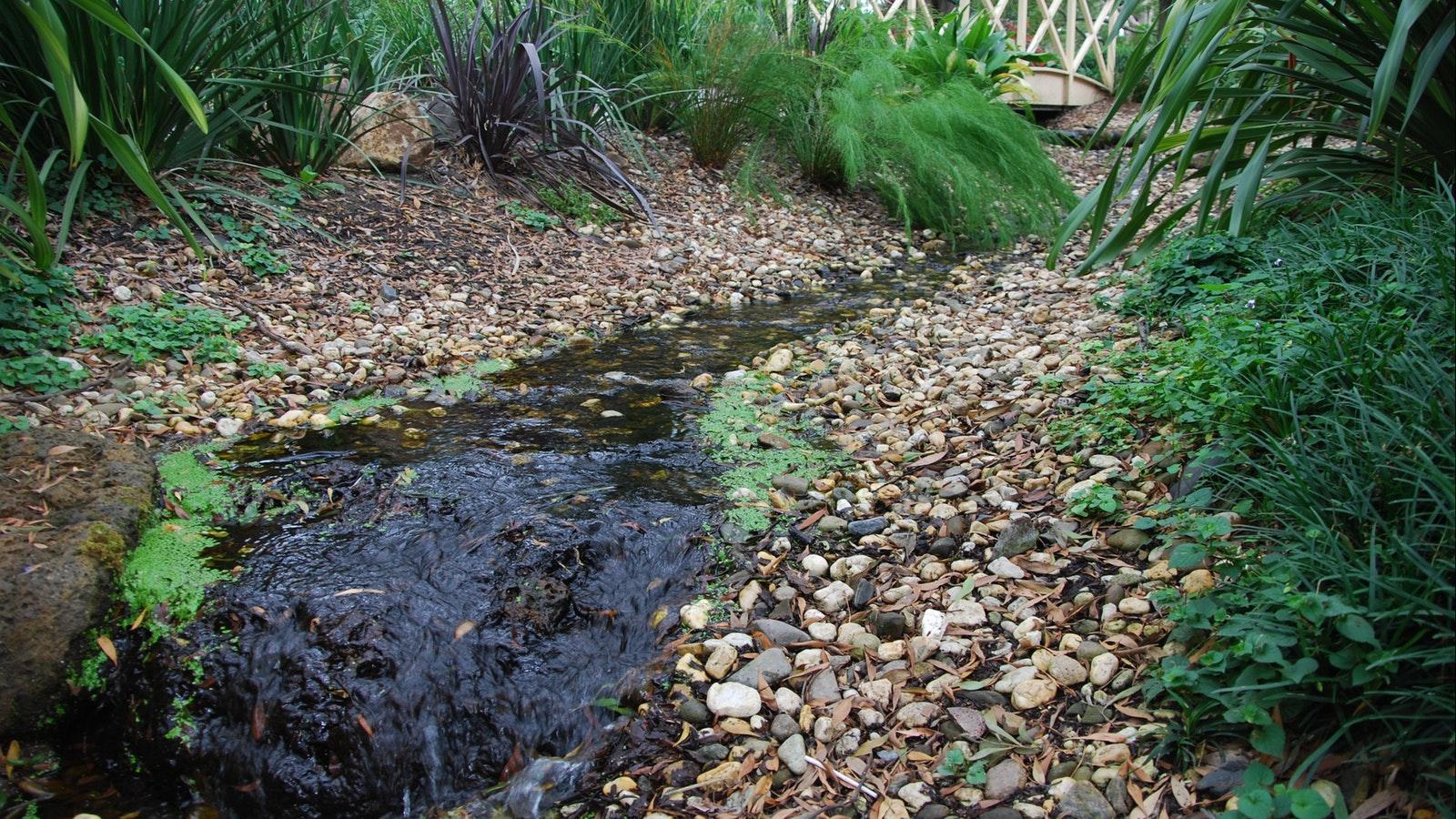 SkyHigh's Garden and creek