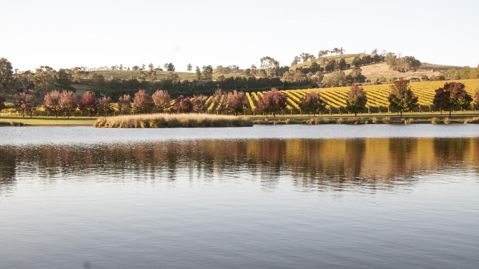Yarrawood Estate - Autumn