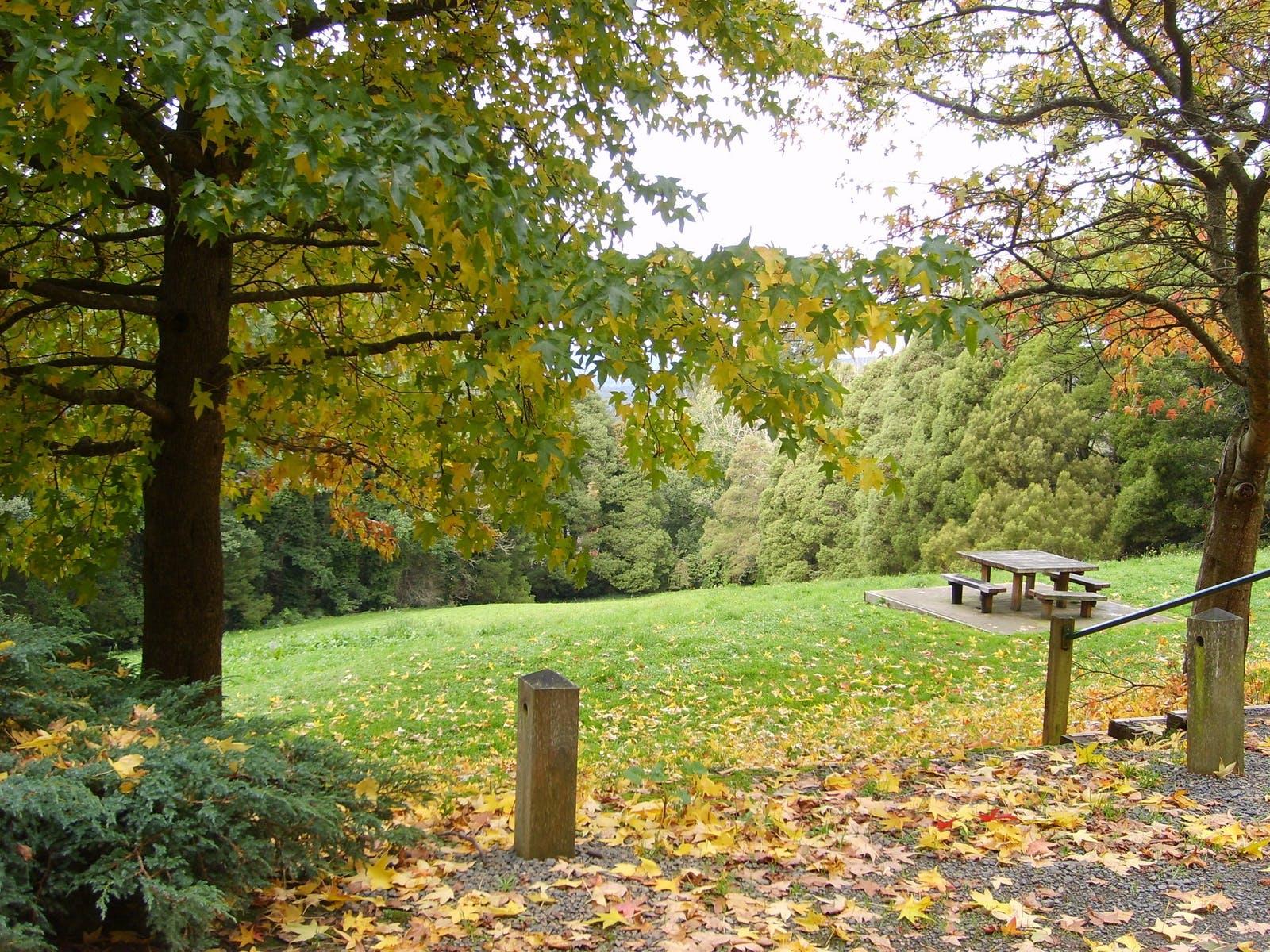 Mount Dandenong Arboretum