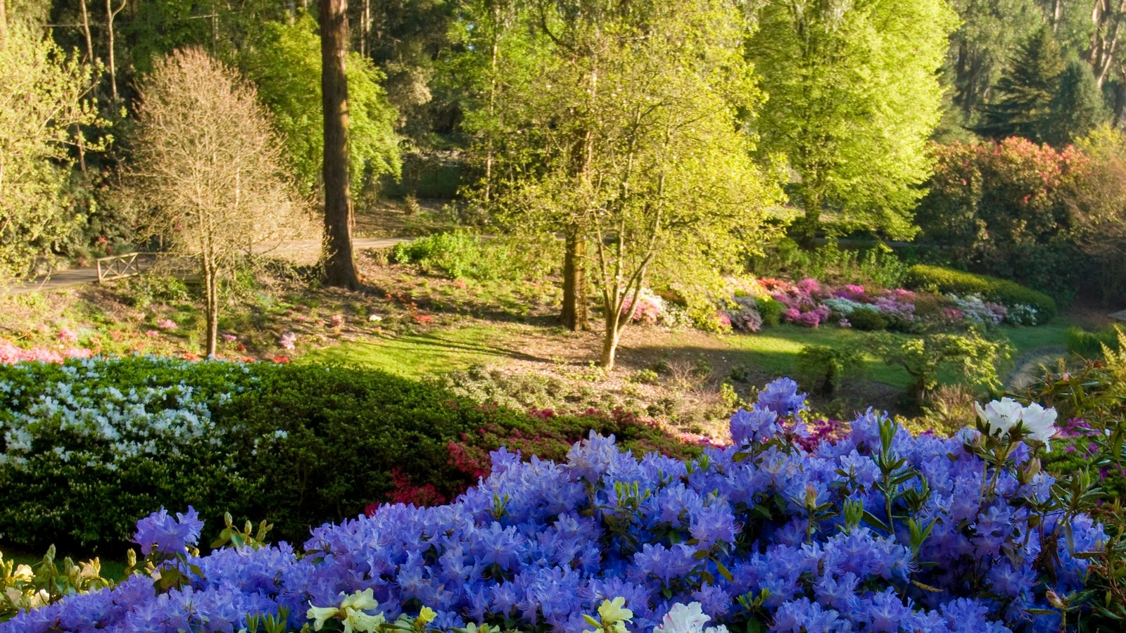 National Rhododendron Gardens. Credit: Parks Victoria