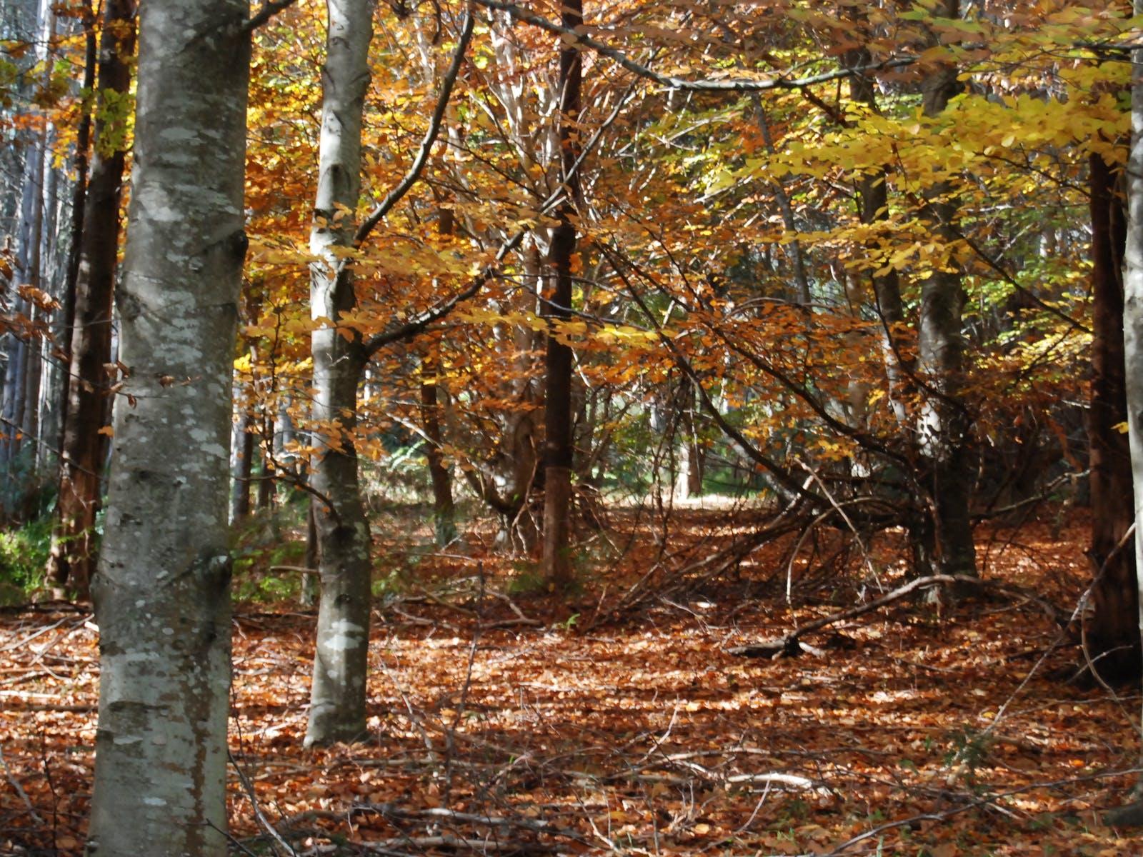 RJ Hamer Arboretum