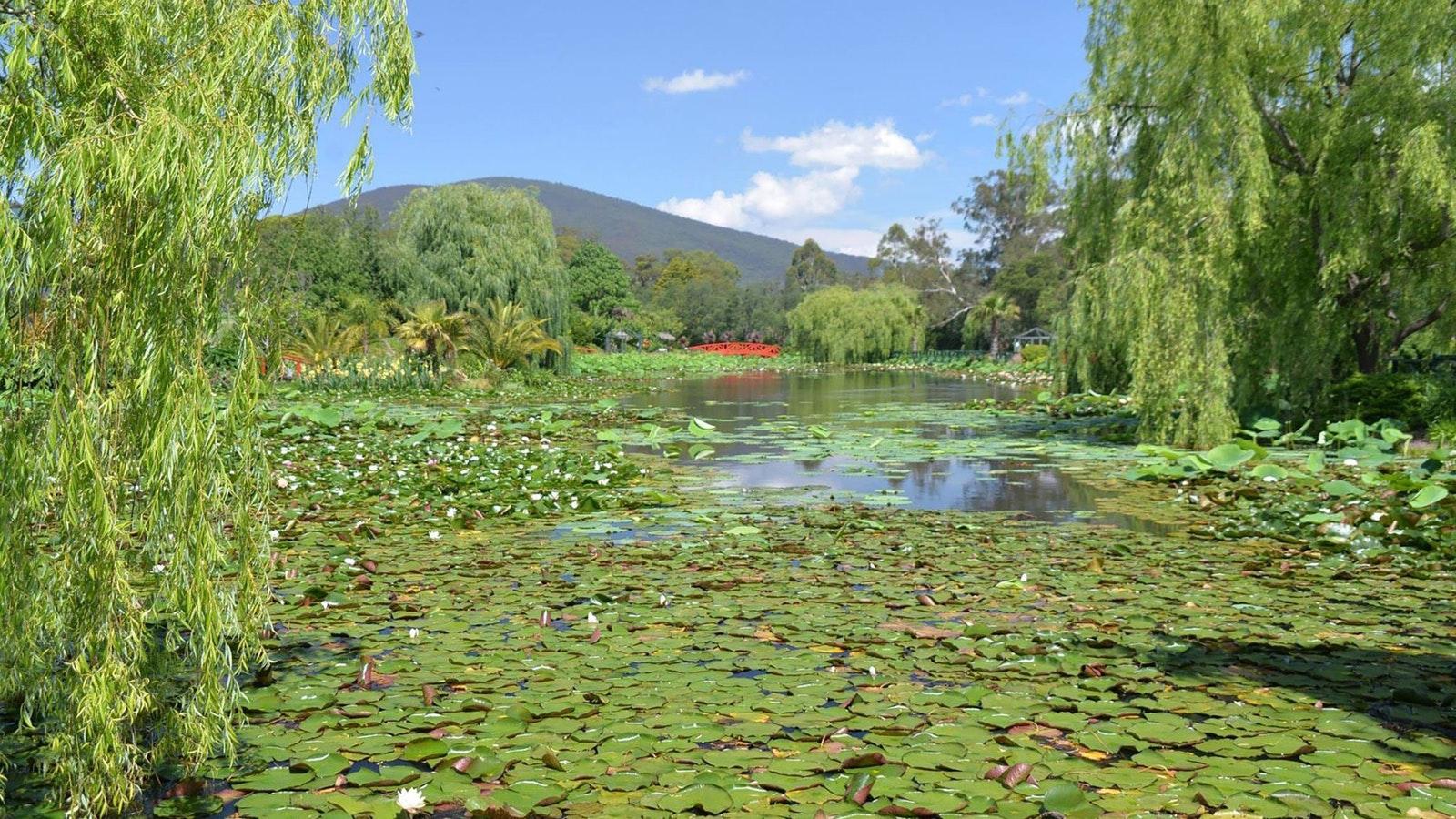 Monet's Lake, Lyn Dwyer