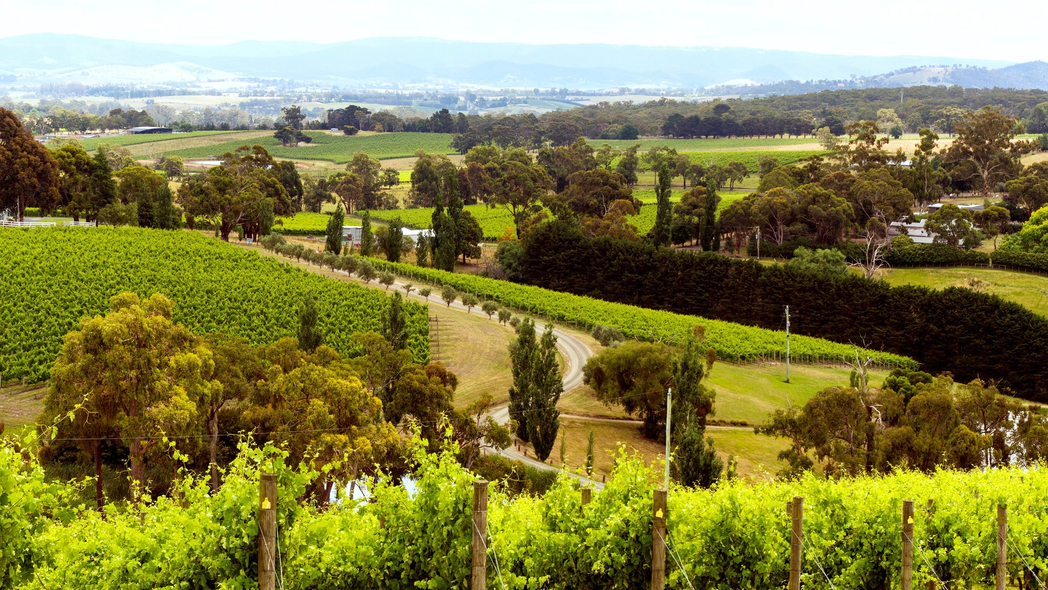 Image result for Yarra Valley Wine