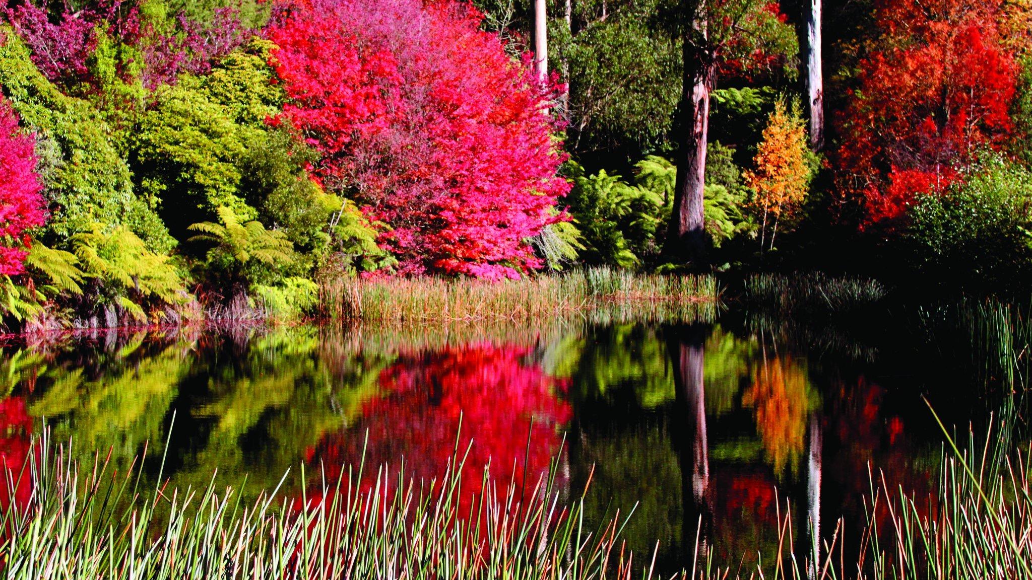 National Rhododenron Garden Olinda