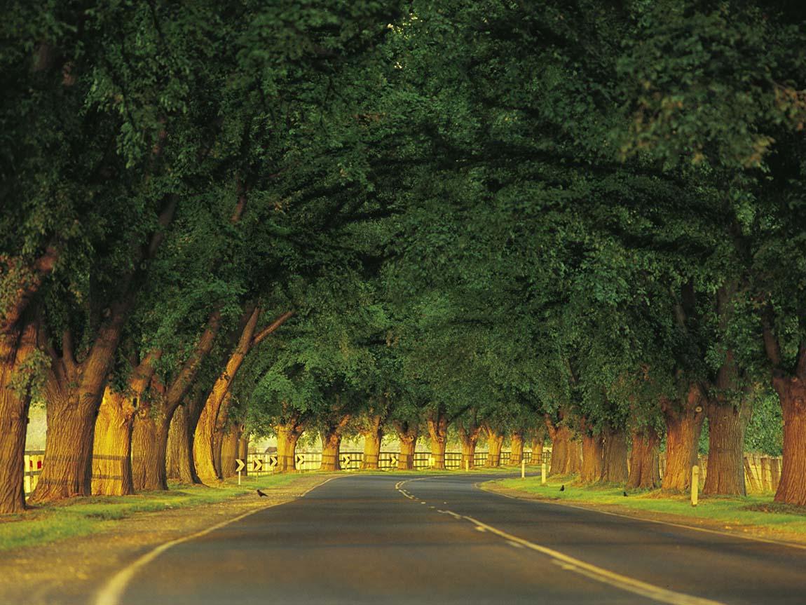 Bacchus Marsh Avenue of Honour, Daylesford and the Macedon Ranges, Victoria, Australia