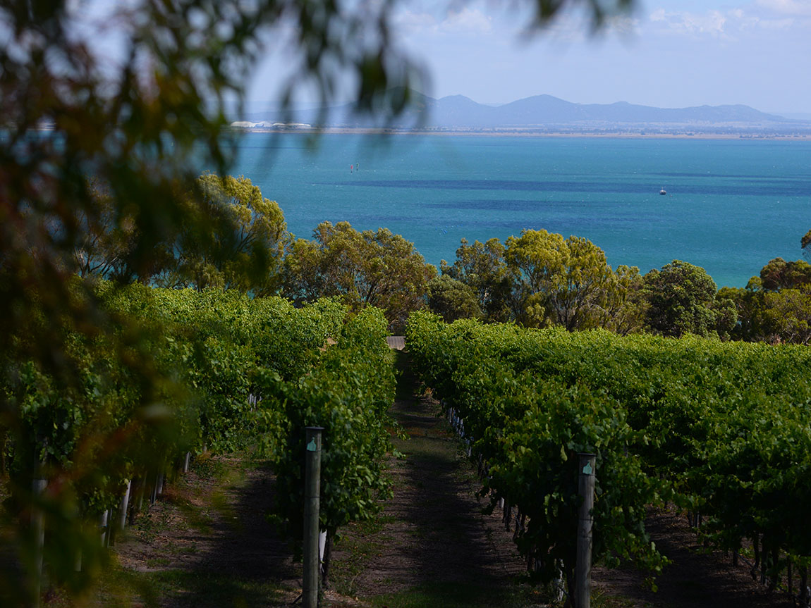 Geelong wine region, Geelong and the Bellarine, Victoria, Australia