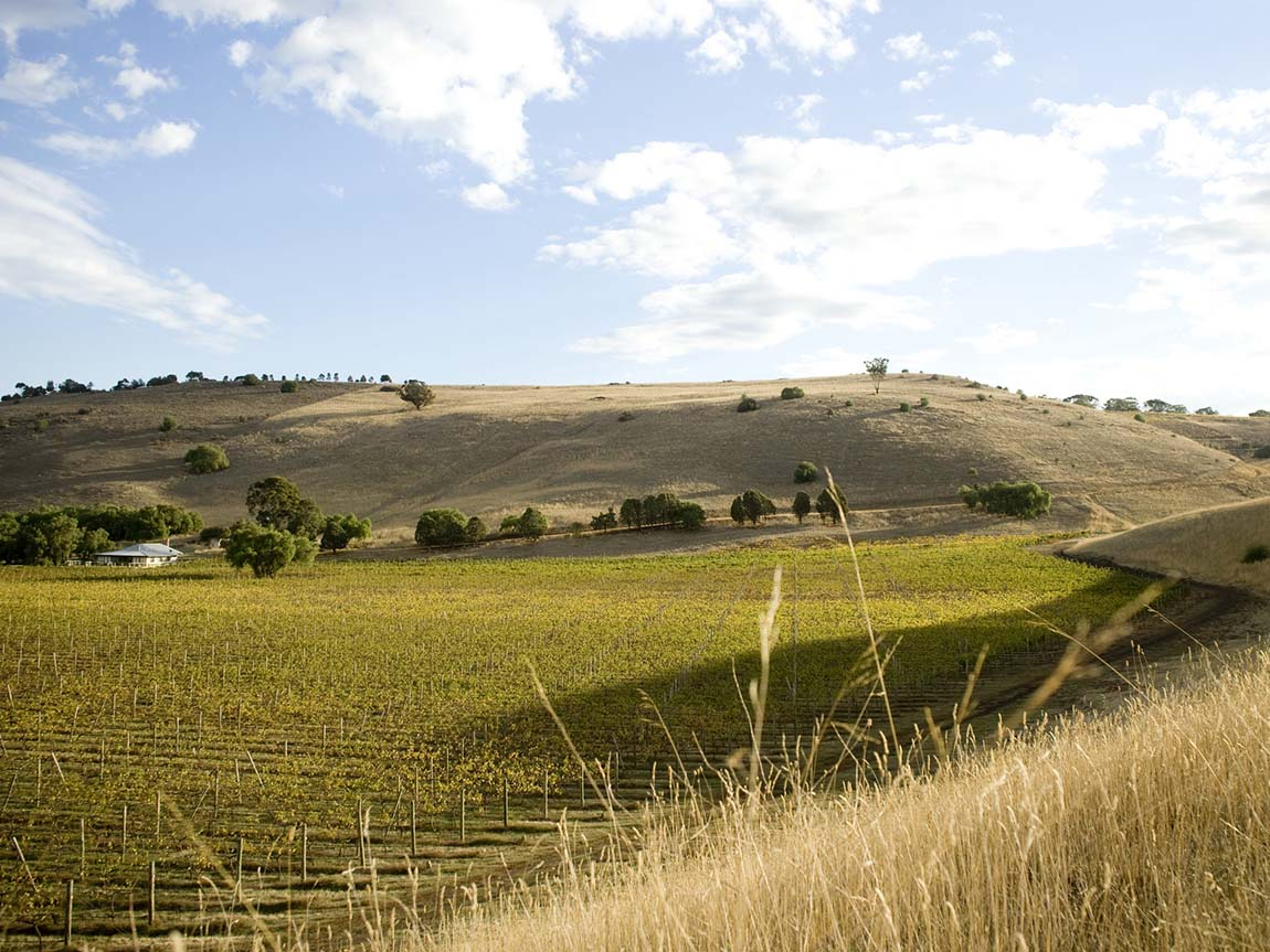 Clyde Park Vineyard, Geelong and the Bellarine, Victoria, Australia