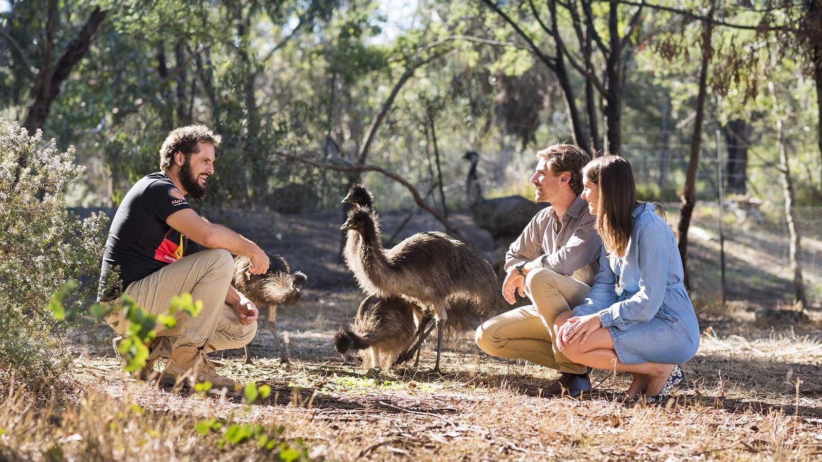 Emus at Narana Aboriginal Culture Centre, Geelong and the Bellarine, Victoria, Australia