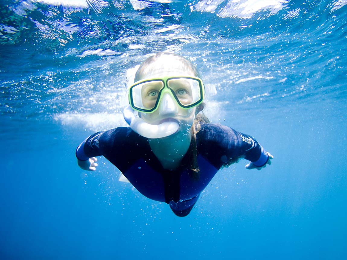 Snorkeling with Sea All Dolphin Swims, Geelong and the Bellarine, Victoria, Australia