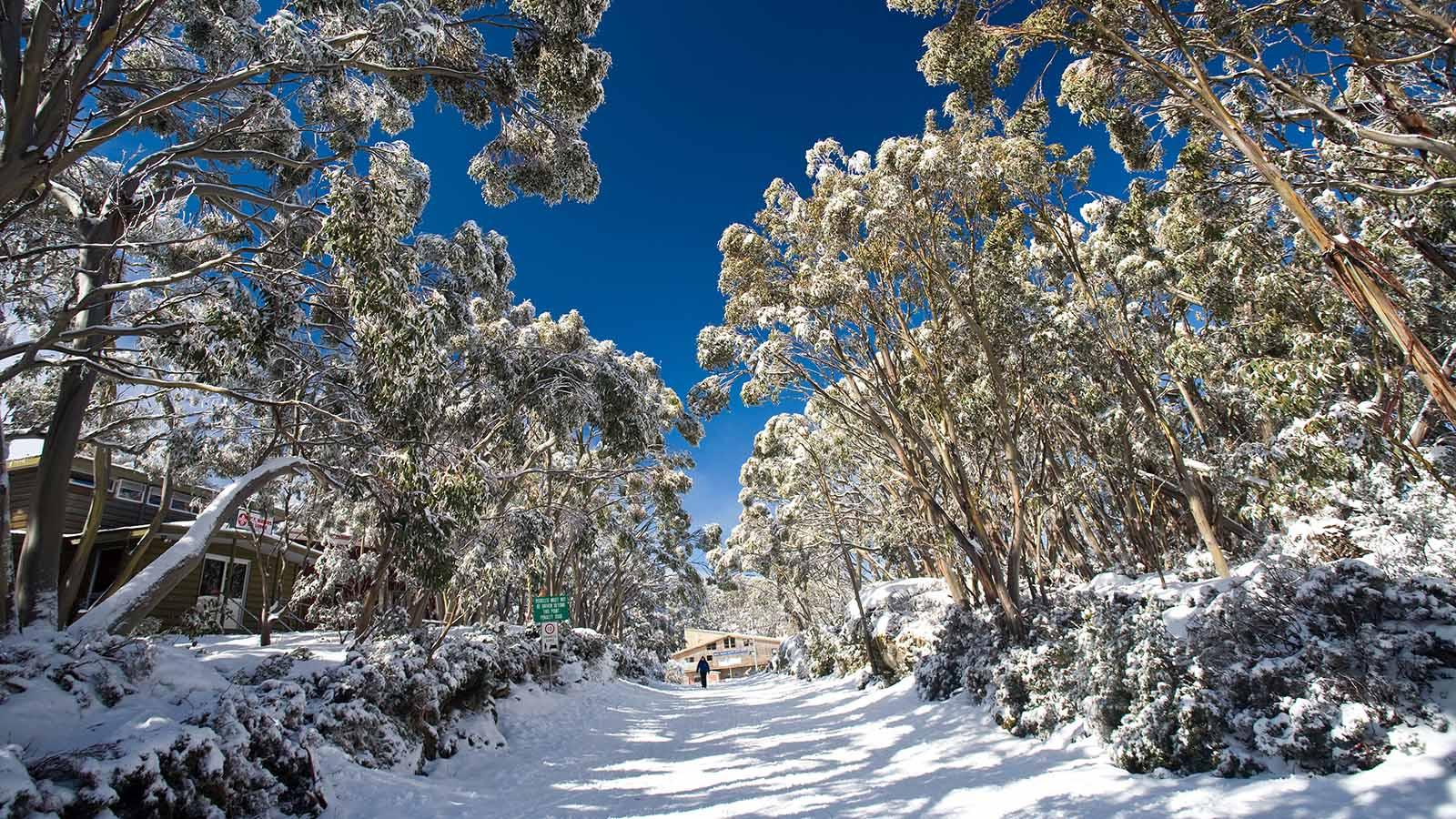 Mt Baw Baw Alpine Resort, Victoria, Australia