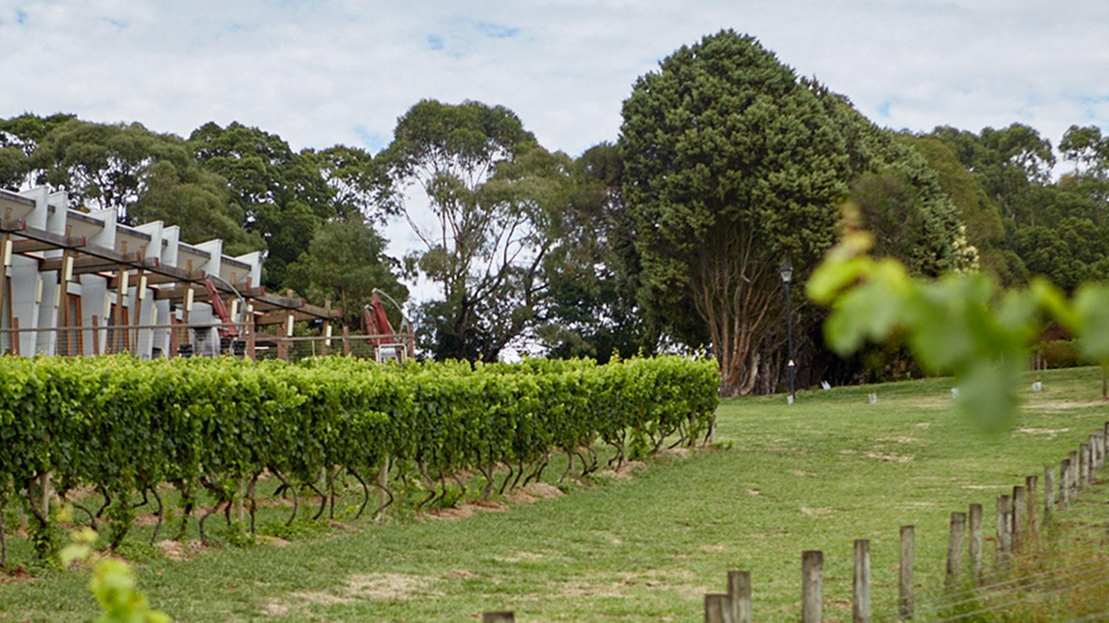 Hogget Kitchen at Wild Dog Winery, Gippsland, Victoria, Australia