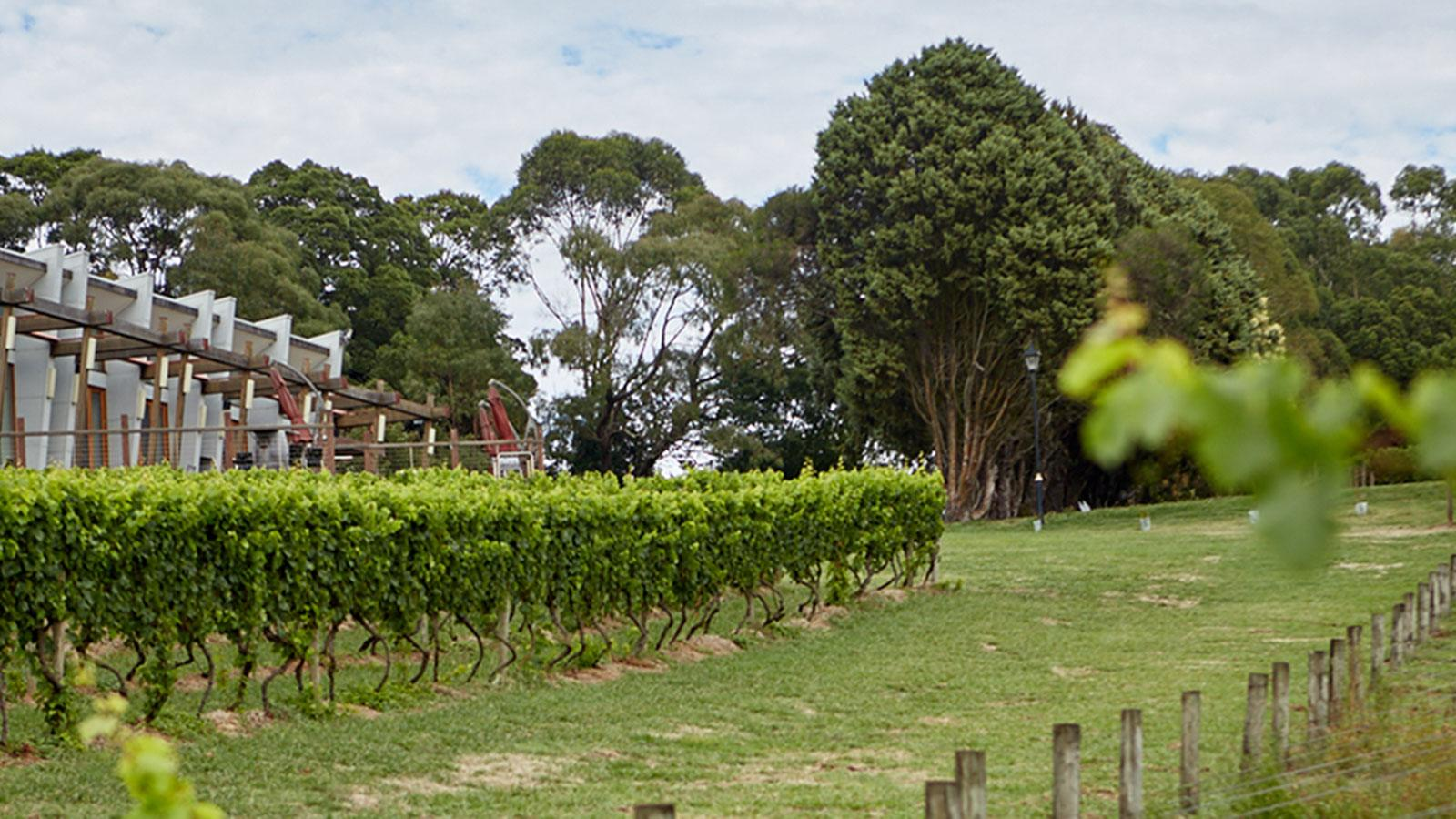 Hogget Kitchen at Wild Dog Winery, Gippsland, Victoria, Australia