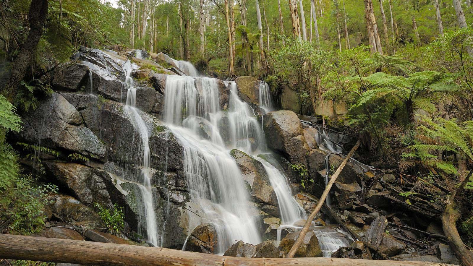 Toorongo Falls, Gippsland, Victoria, Australia