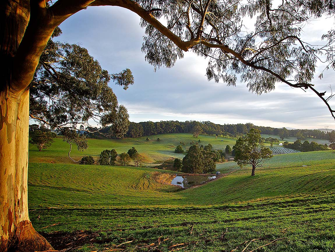 Mirboo North scenery, Gippsland, Victoria, Australia. Photo: Geoff Watt