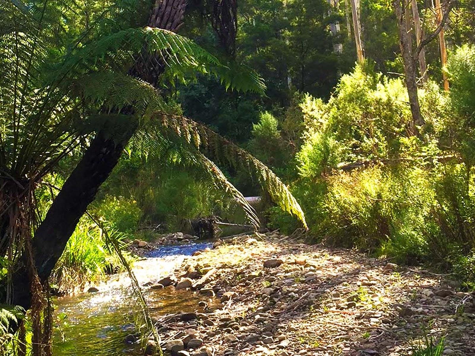 Errinundra National Park, Gippsland, Victoria, Australia