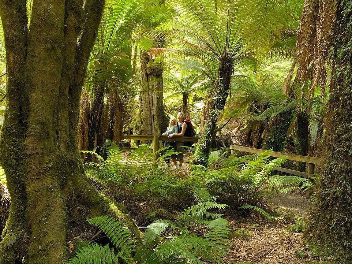 Inspiring gippsland walks gippsland victoria australia for Australian rainforest