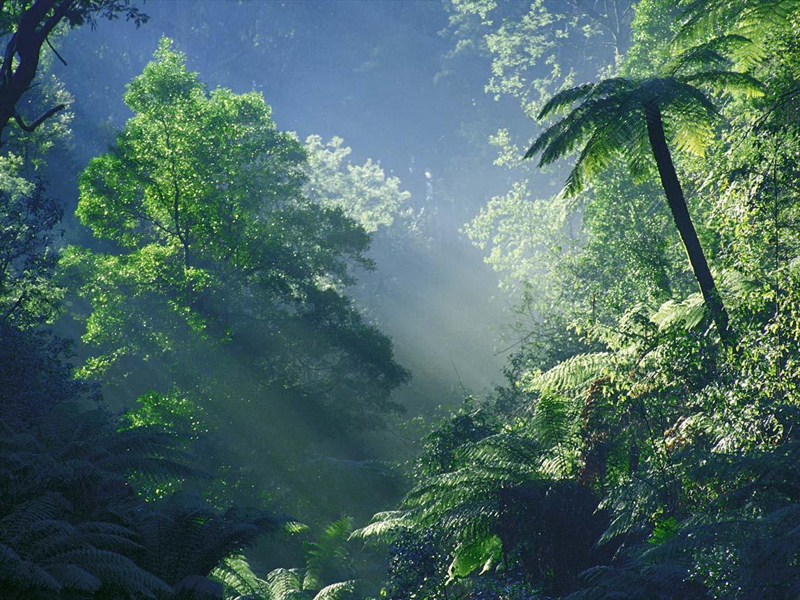 Rainforest in Orbost, Gippsland, Victoria, Australia